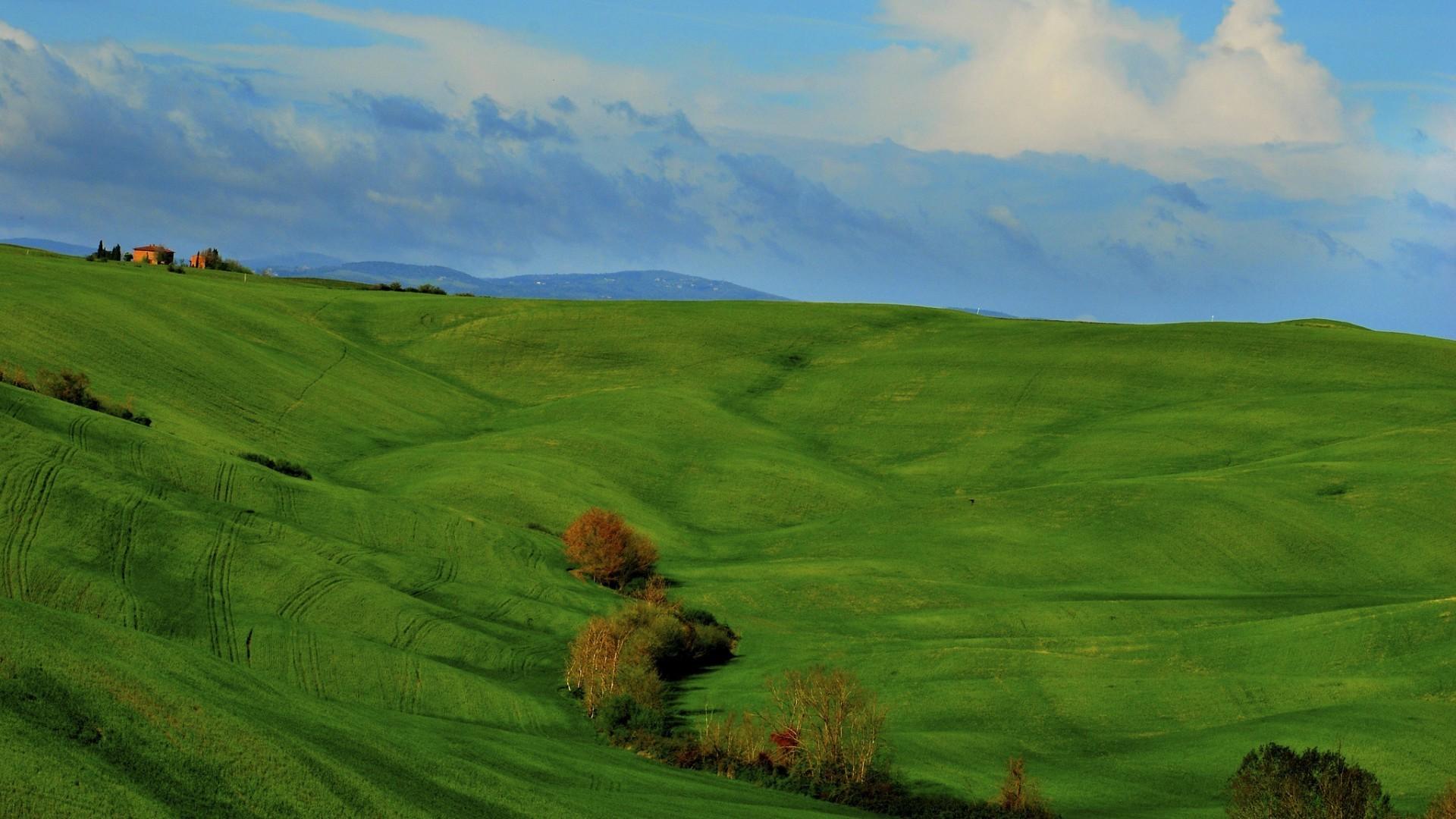 Картинки зеленой степи