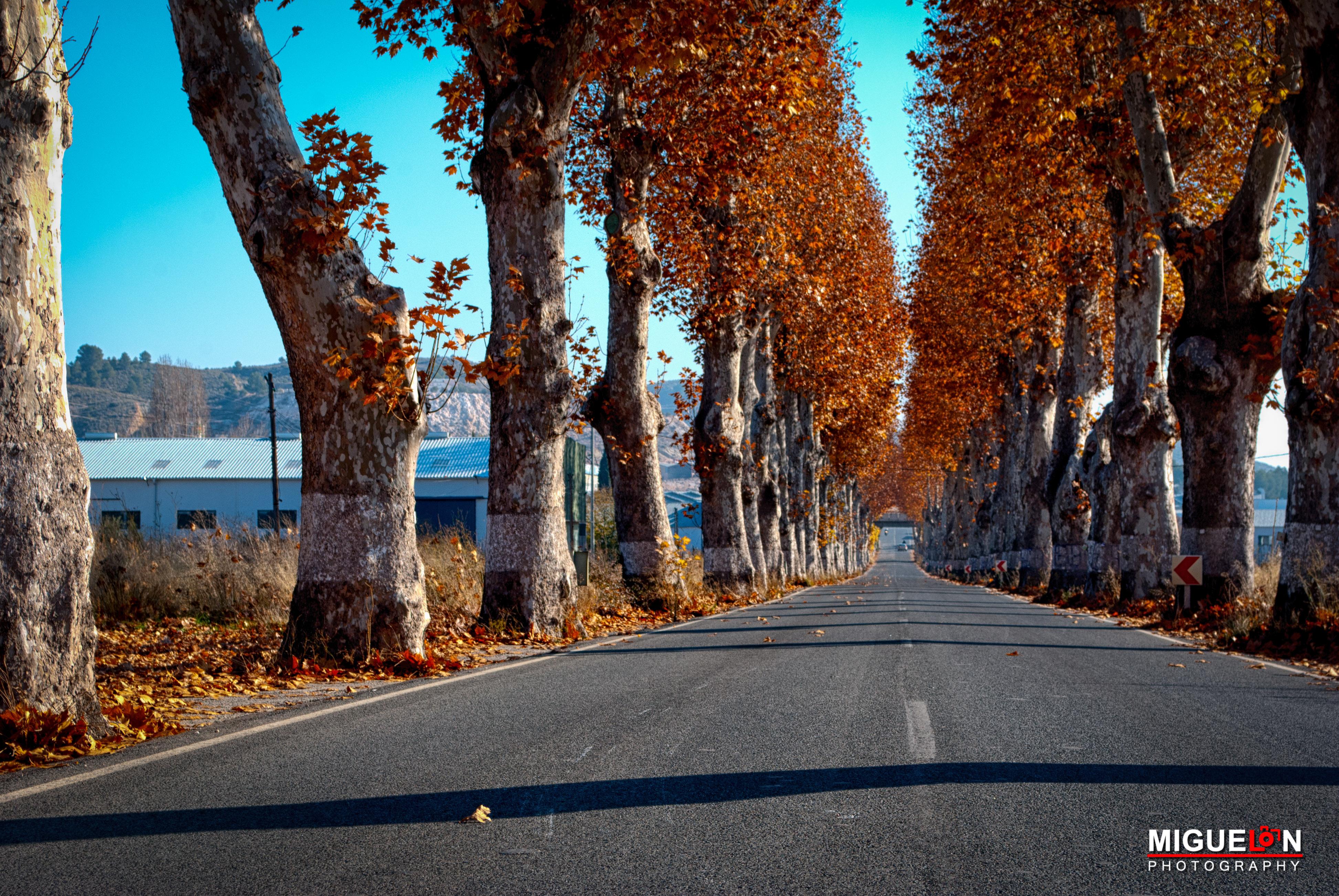 Fondos de pantalla : Árboles, paisaje, contraste, vistoso, otoño ...