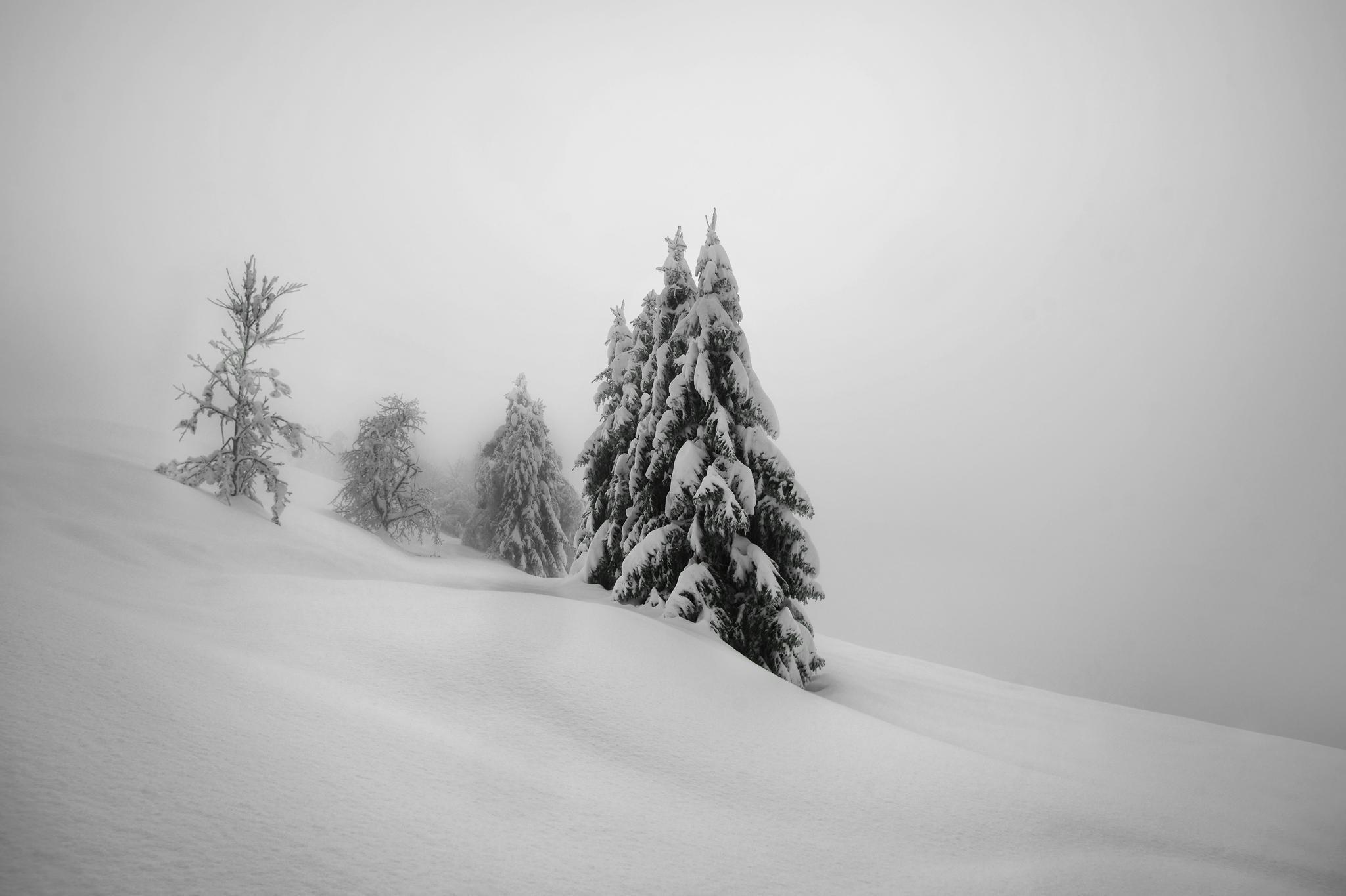 fond d 39 cran des arbres paysage dessin monochrome neige hiver brouillard gel arbre. Black Bedroom Furniture Sets. Home Design Ideas