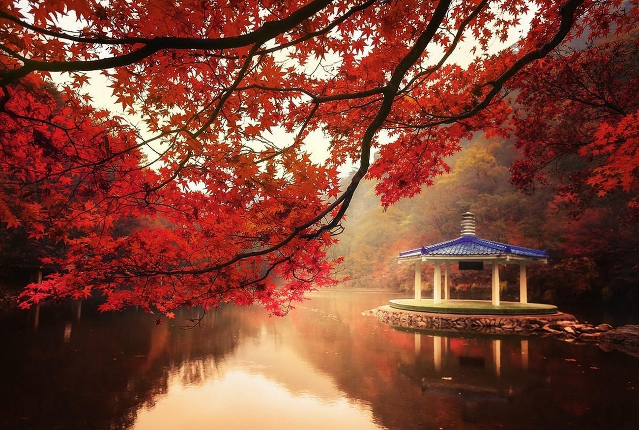 Baggrunde tr er landskab efter r s vand natur r d for Immagini autunno hd