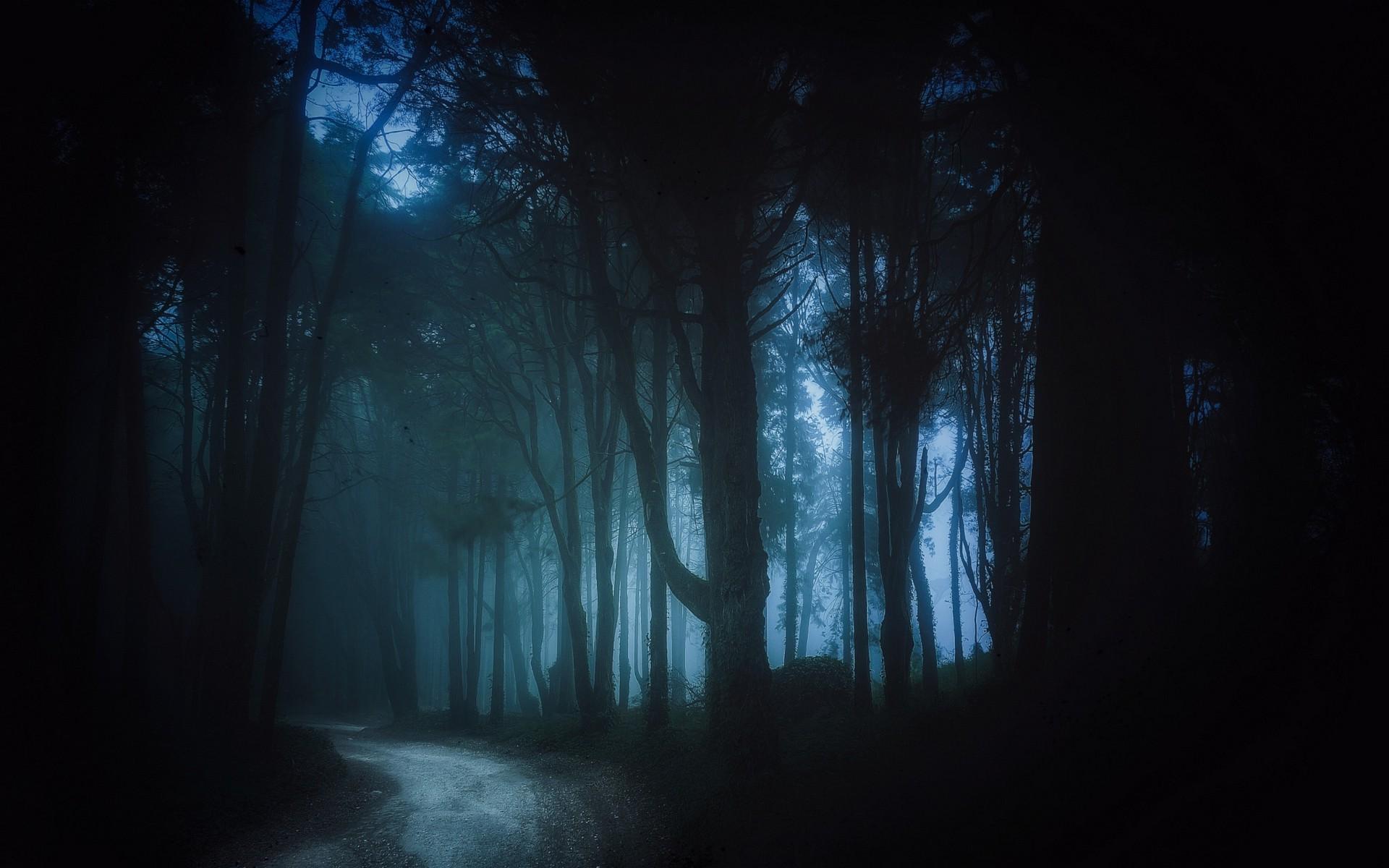 Trees Landscape Forest Black Dark Night Nature Mist Dirt Road Atmosphere Path Midnight Formation Light Tree