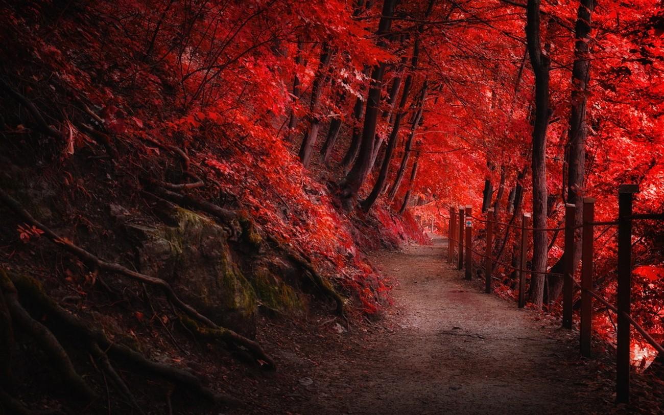 fond d u0026 39  u00e9cran   des arbres  paysage  for u00eat  tomber  montagnes  la nature  rouge  la grotte
