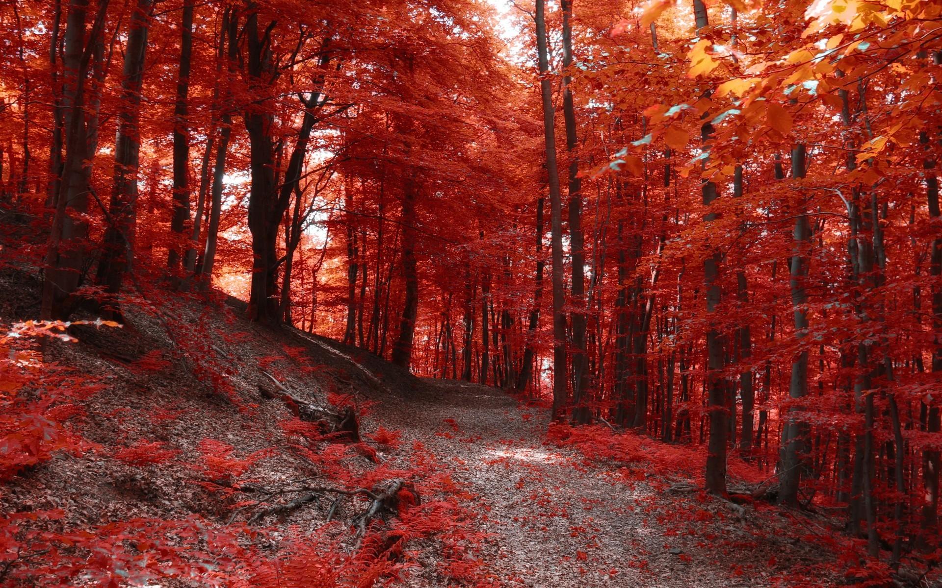 красный лес рисунок позволяет быстро сварить