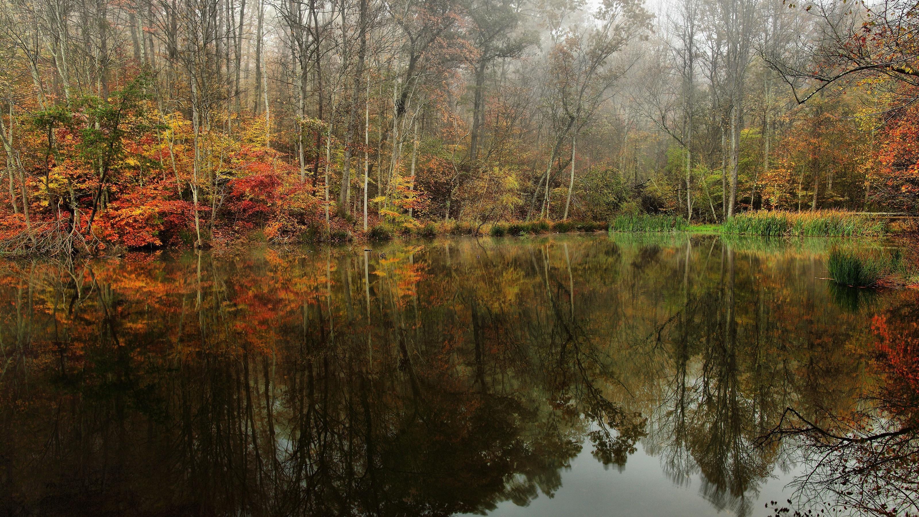 обои на рабочий стол осень природа река озеро лес № 241667 загрузить