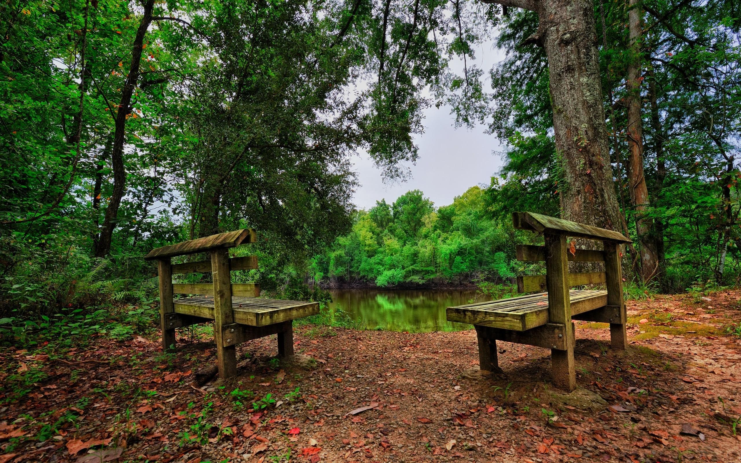 обои : Деревьями, пейзаж, листья, сад, озеро, природа, парк, Зеленый, скамейка, HDR, Дикая местность, Джунгли, Тропический лес,
