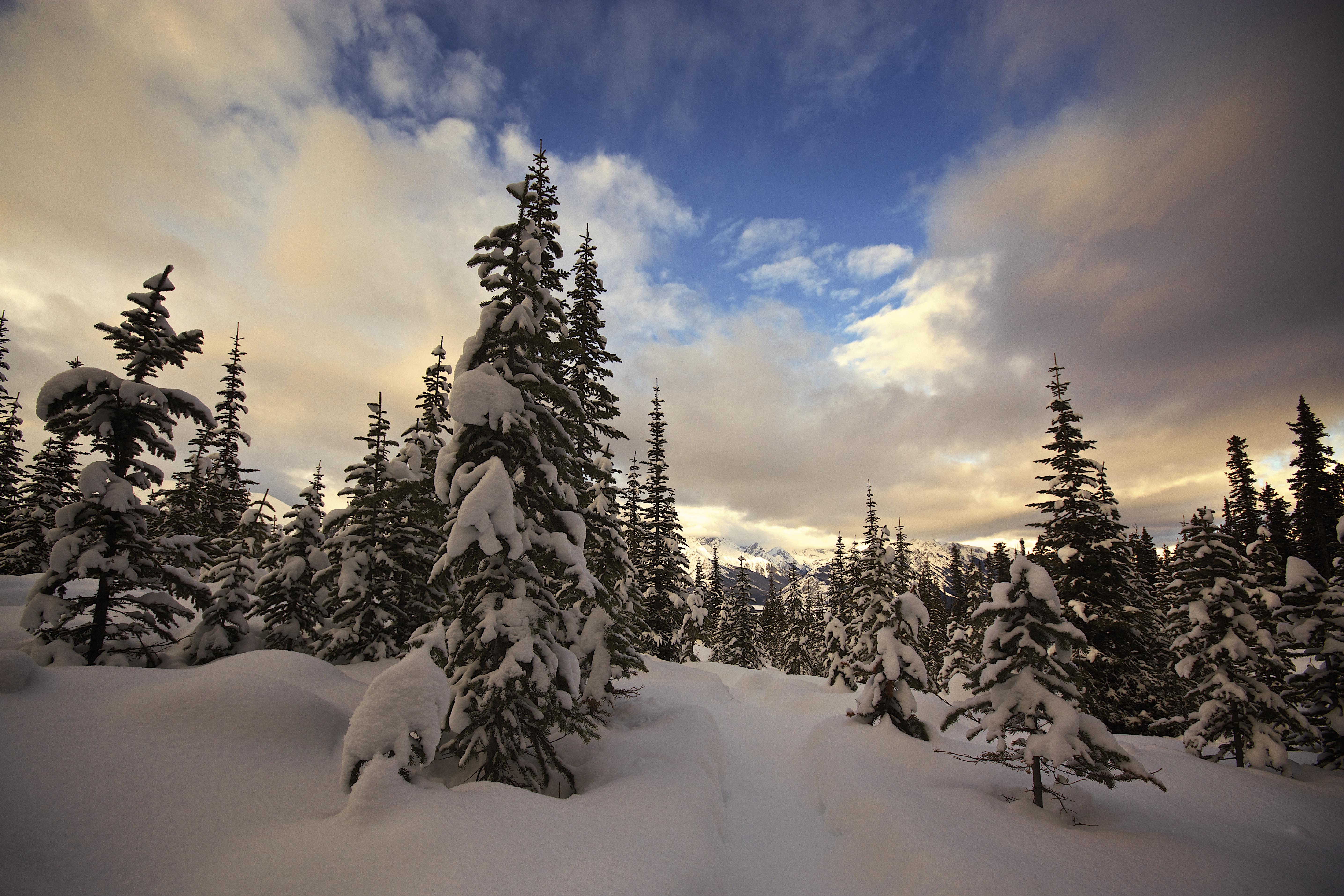 Fond D Ecran Des Arbres Paysage Foret Montagnes Lac