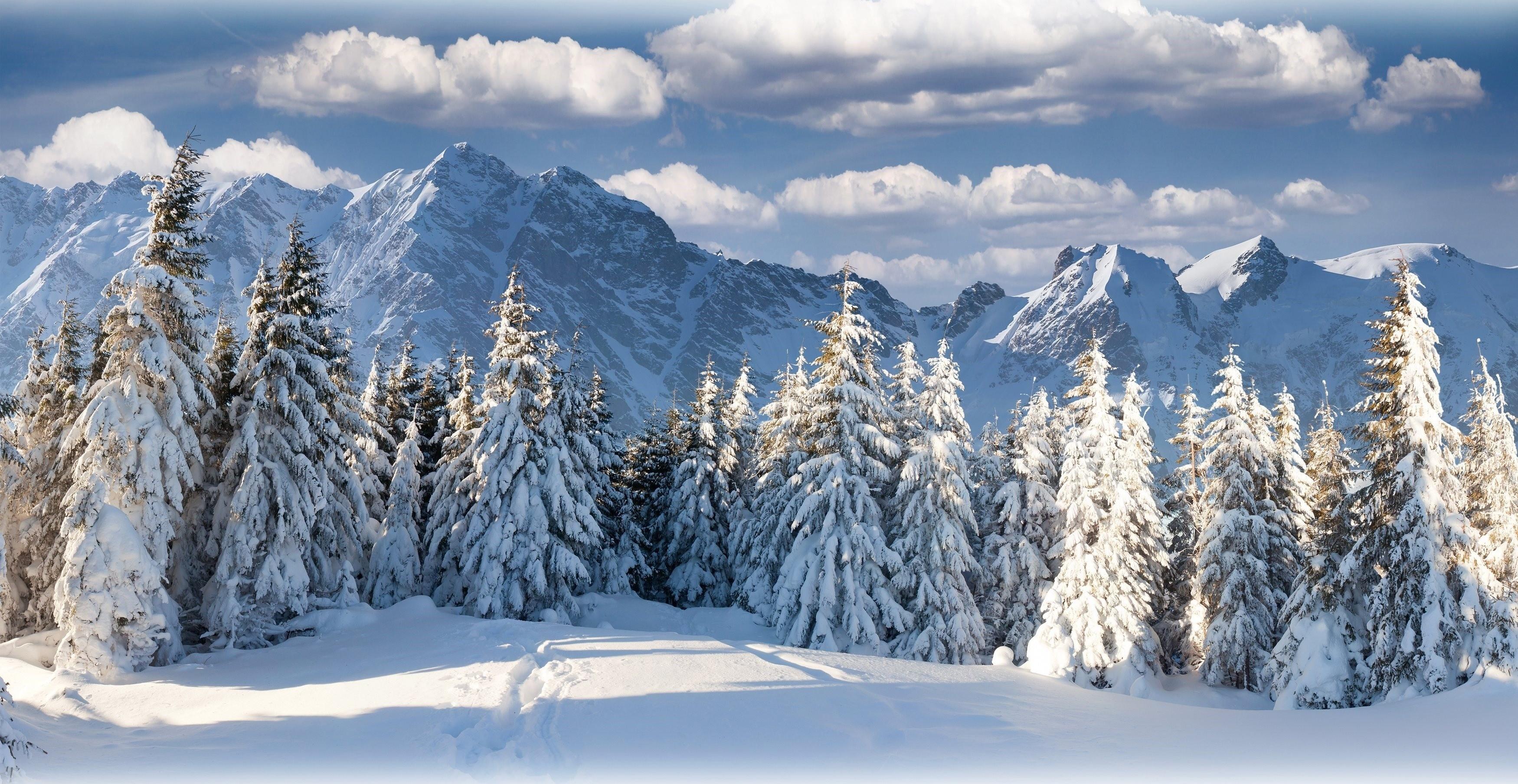 Fond D'écran : Des Arbres, Paysage, Forêt, Montagnes, La Nature, Neige, Hiver, épicéa, Alpes