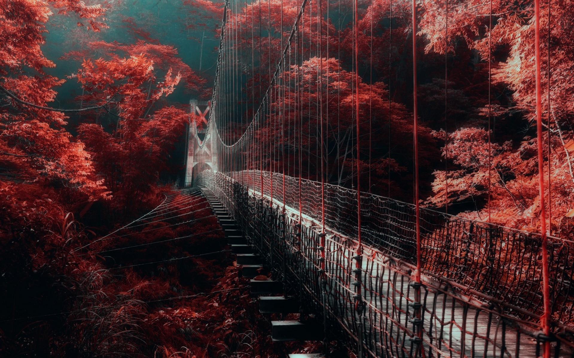Wallpaper : trees, landscape, forest