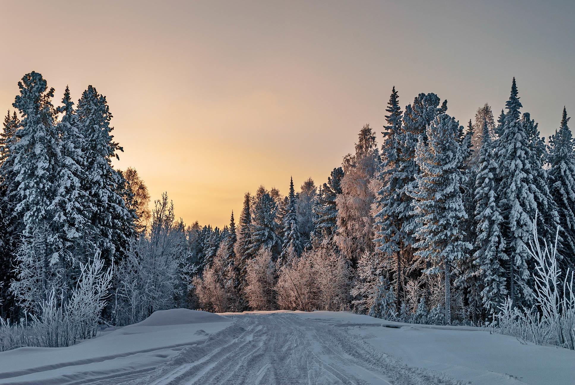 девушка картинки зимний снежный коми лес масла создает