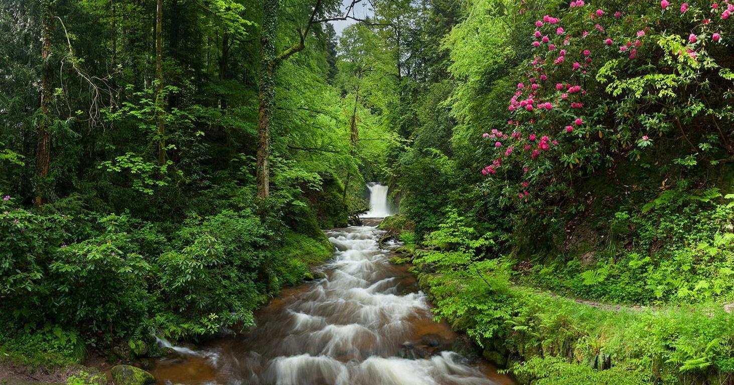 сможете узнать картинки поляна с рекой цветами водопадом гибель всех