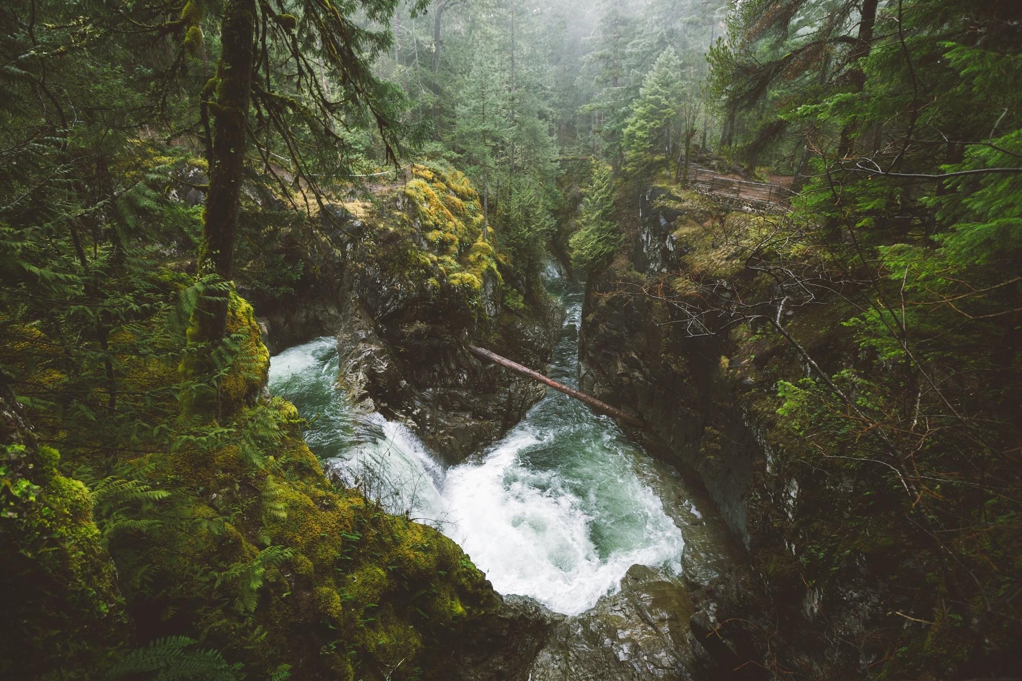Фото леса ванкувера