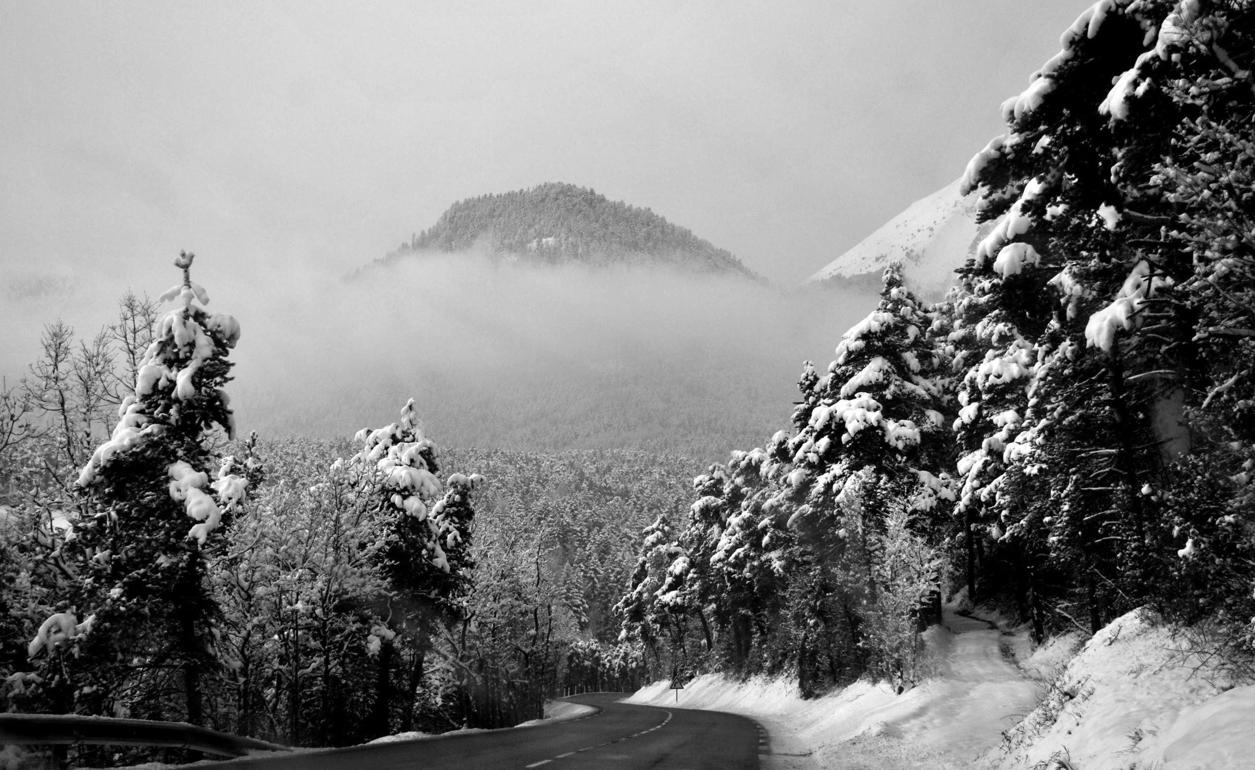 комментариях черно белая фотография зимней тайги охраняет свою гаремную