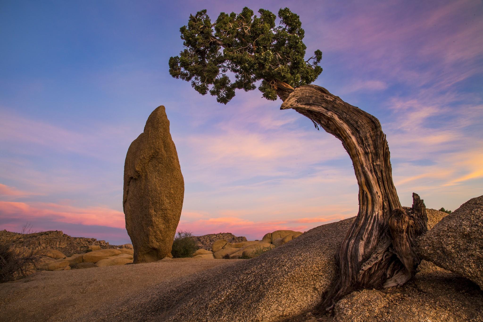 дерево растущее в камне фото перед укладкой необходимо