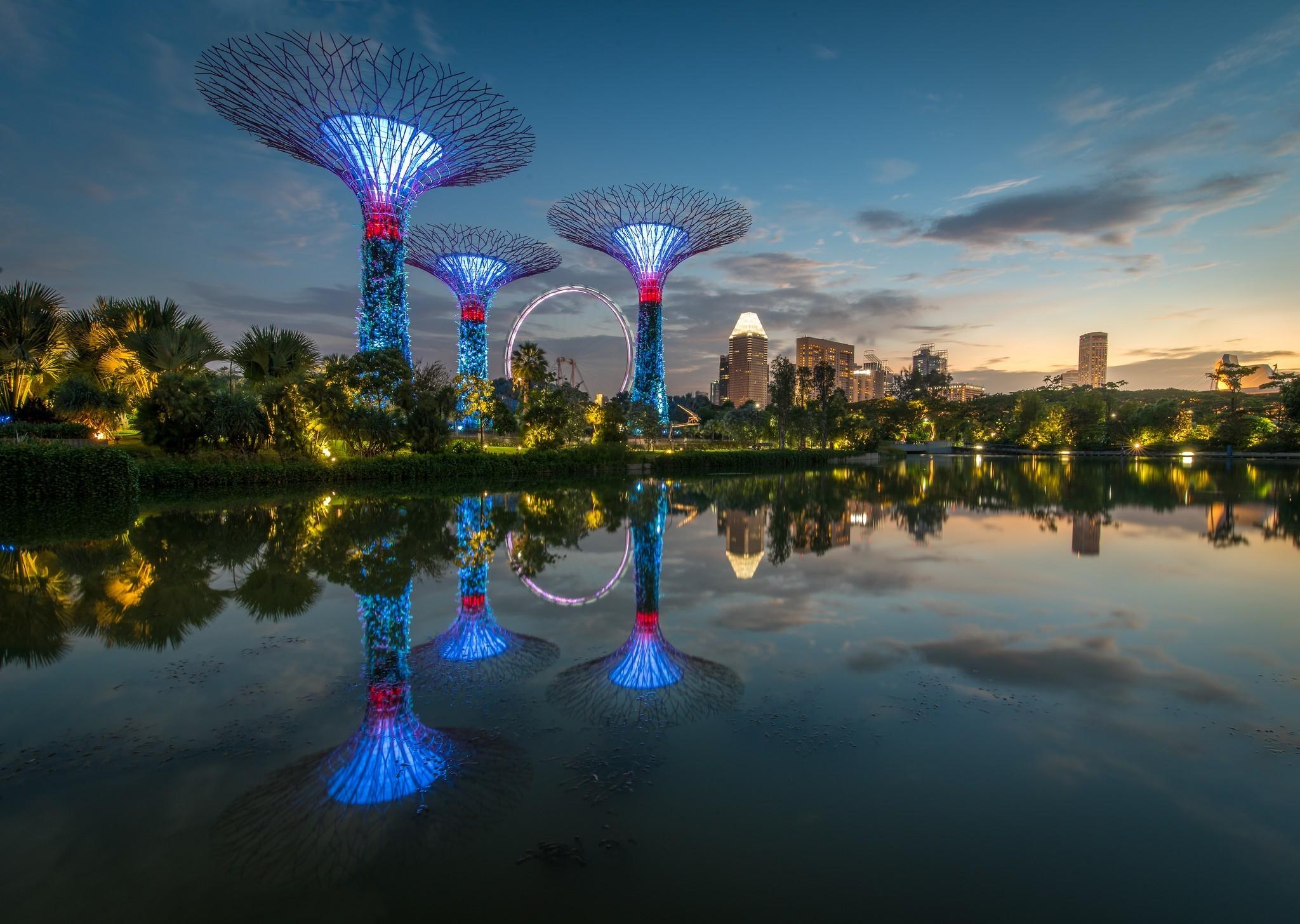 Wallpaper Trees Landscape Lights City Night