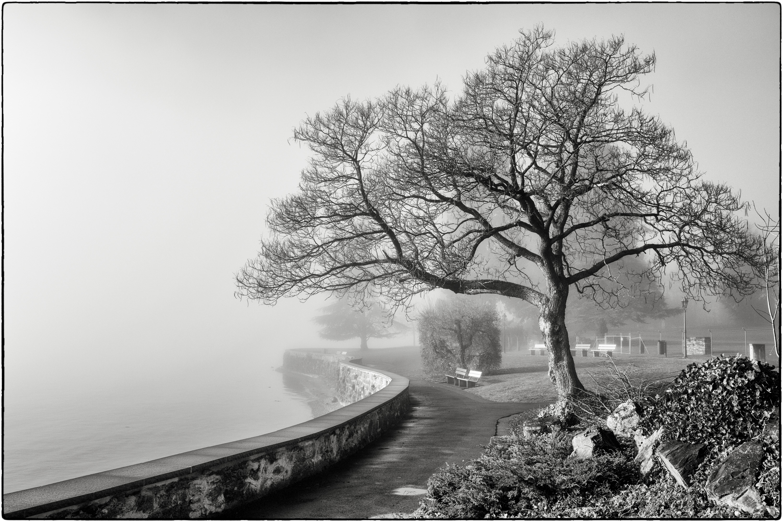 Hintergrundbilder : Bäume, Landschaft, Einfarbig, 500px