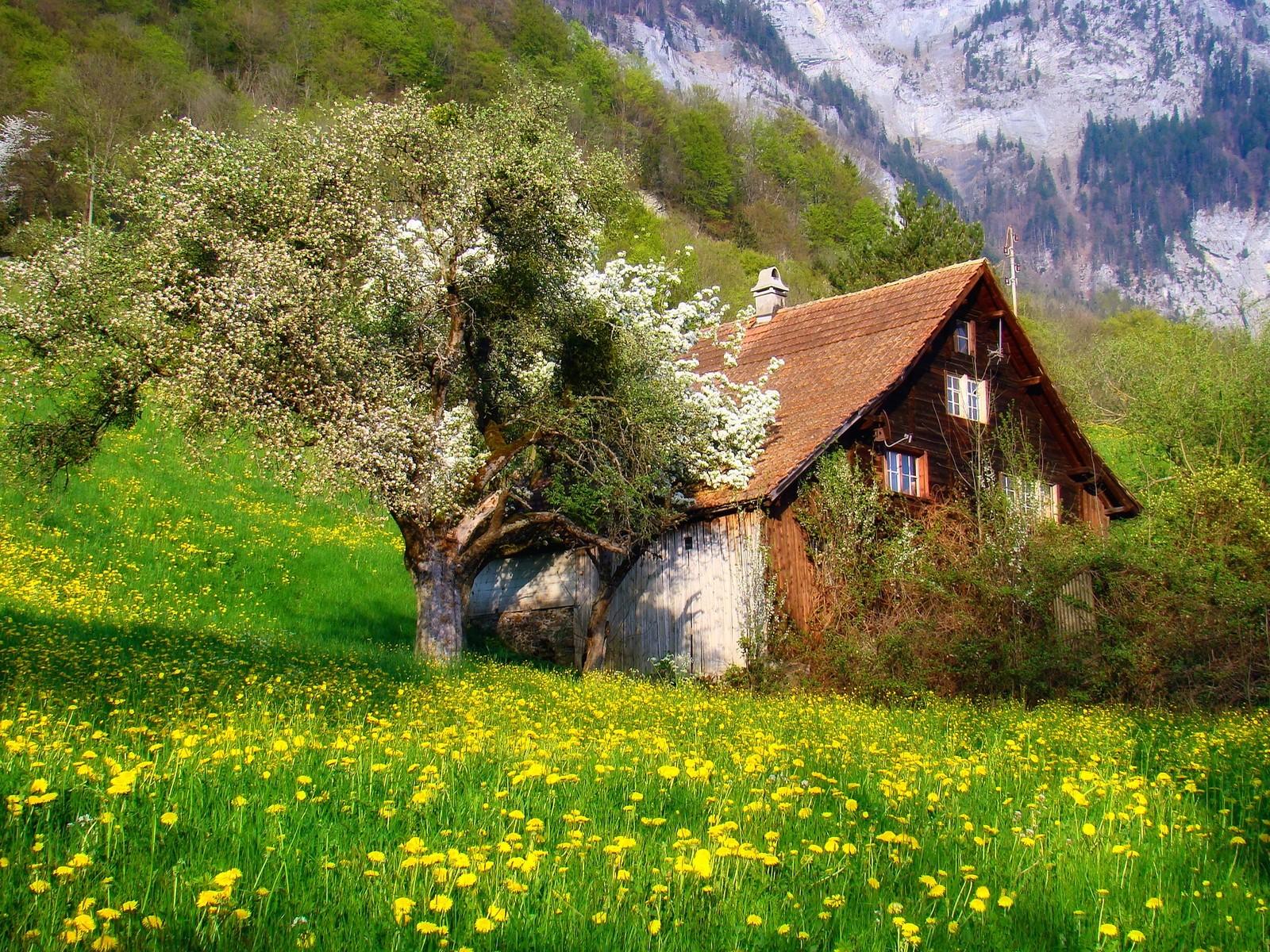 fond d 39 cran des arbres paysage montagnes fleurs la nature champ la photographie vert. Black Bedroom Furniture Sets. Home Design Ideas
