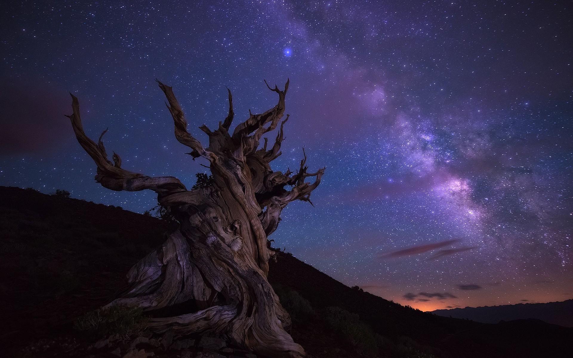 картинки ночное небо и деревья собака коричневая