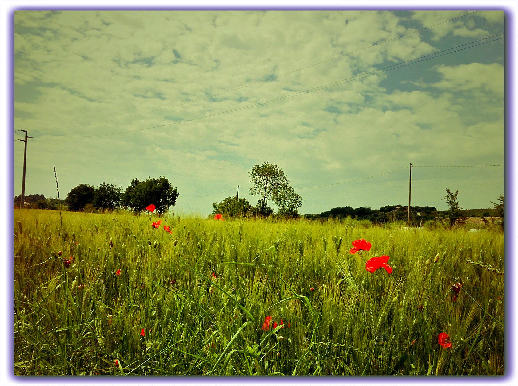 Fiori Jesi.Sfondi Alberi Paesaggio Bianca Fiori Italia Natura Rosso