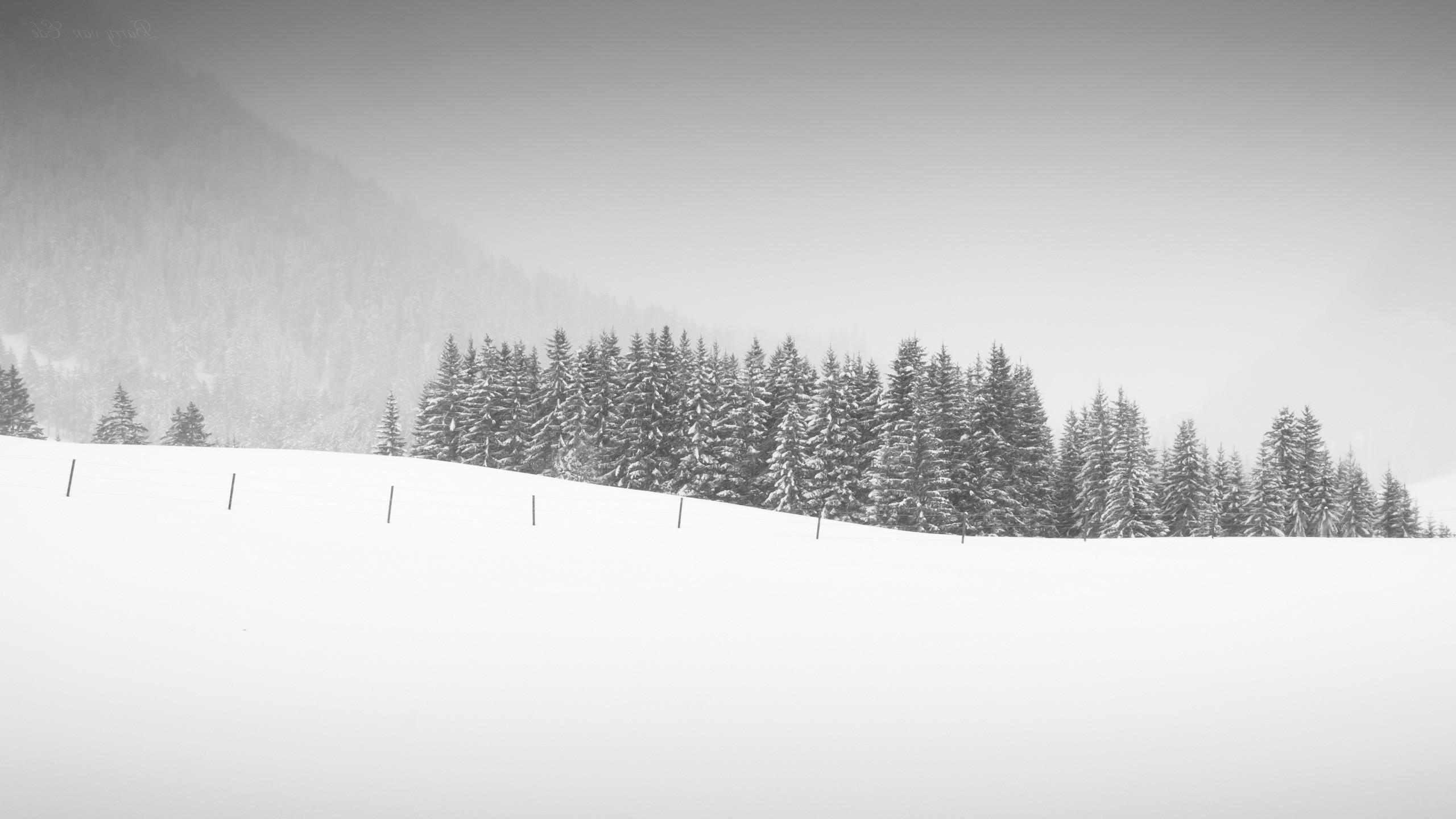 Fond Blanc 2560x1440