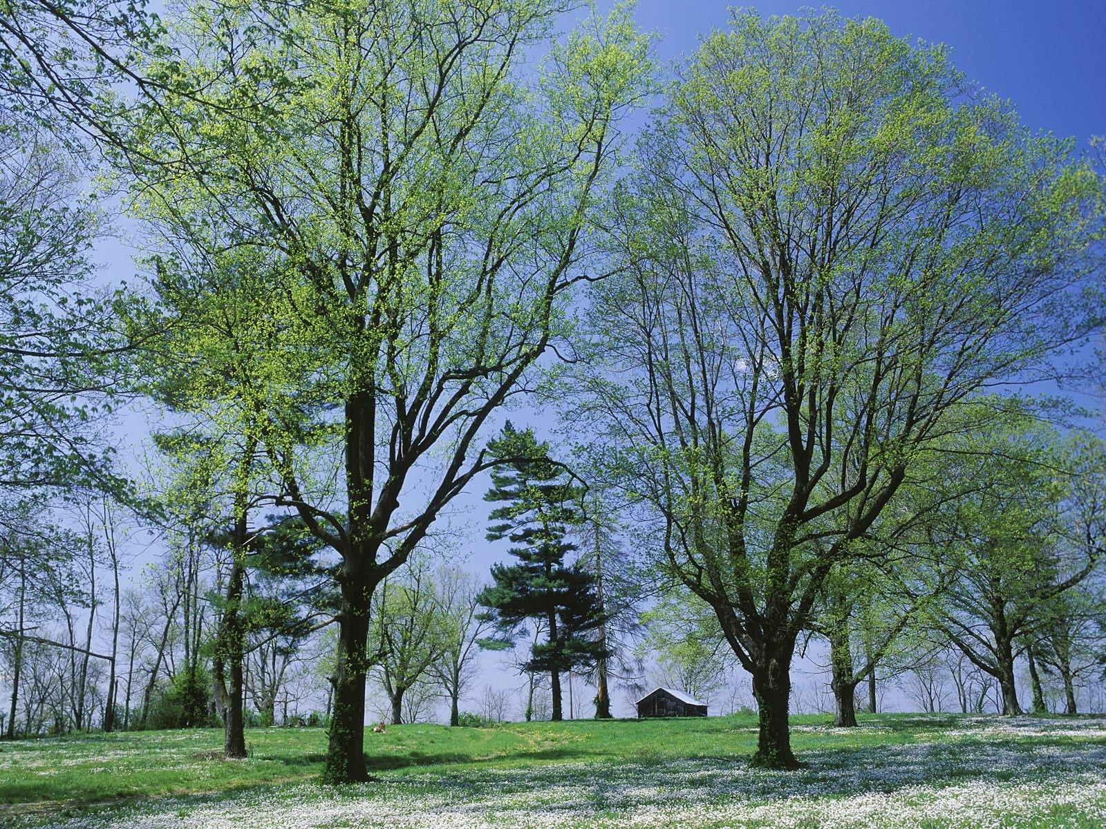 Весенние деревья в картинках