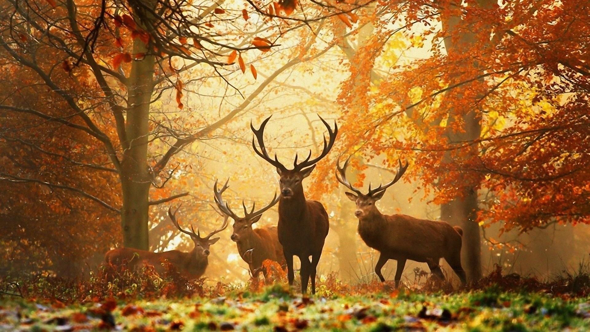 image animaux en automne