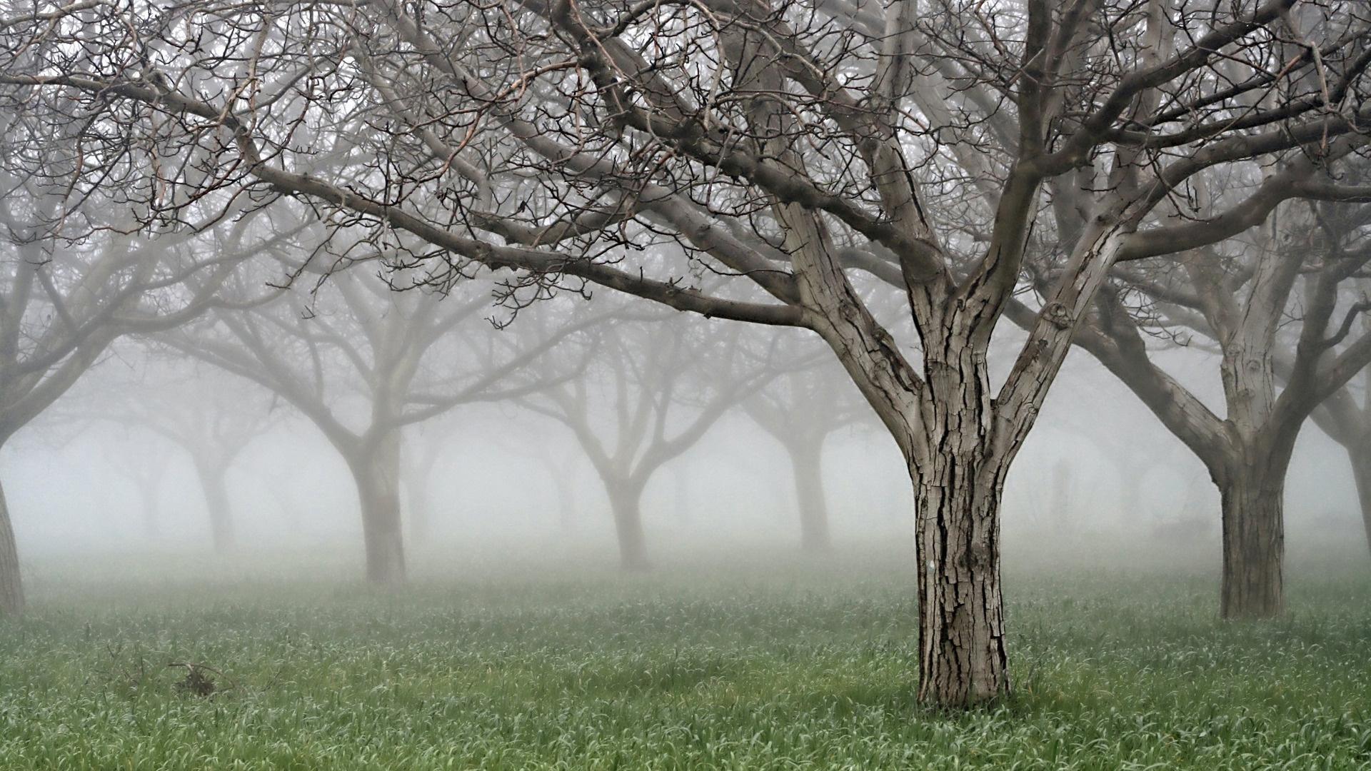 самом картинки деревья серо зеленые позже