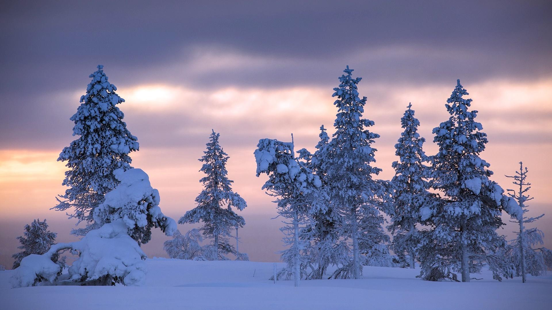Wallpaper Trees Nature Landscape Snow Winter 1920x1080