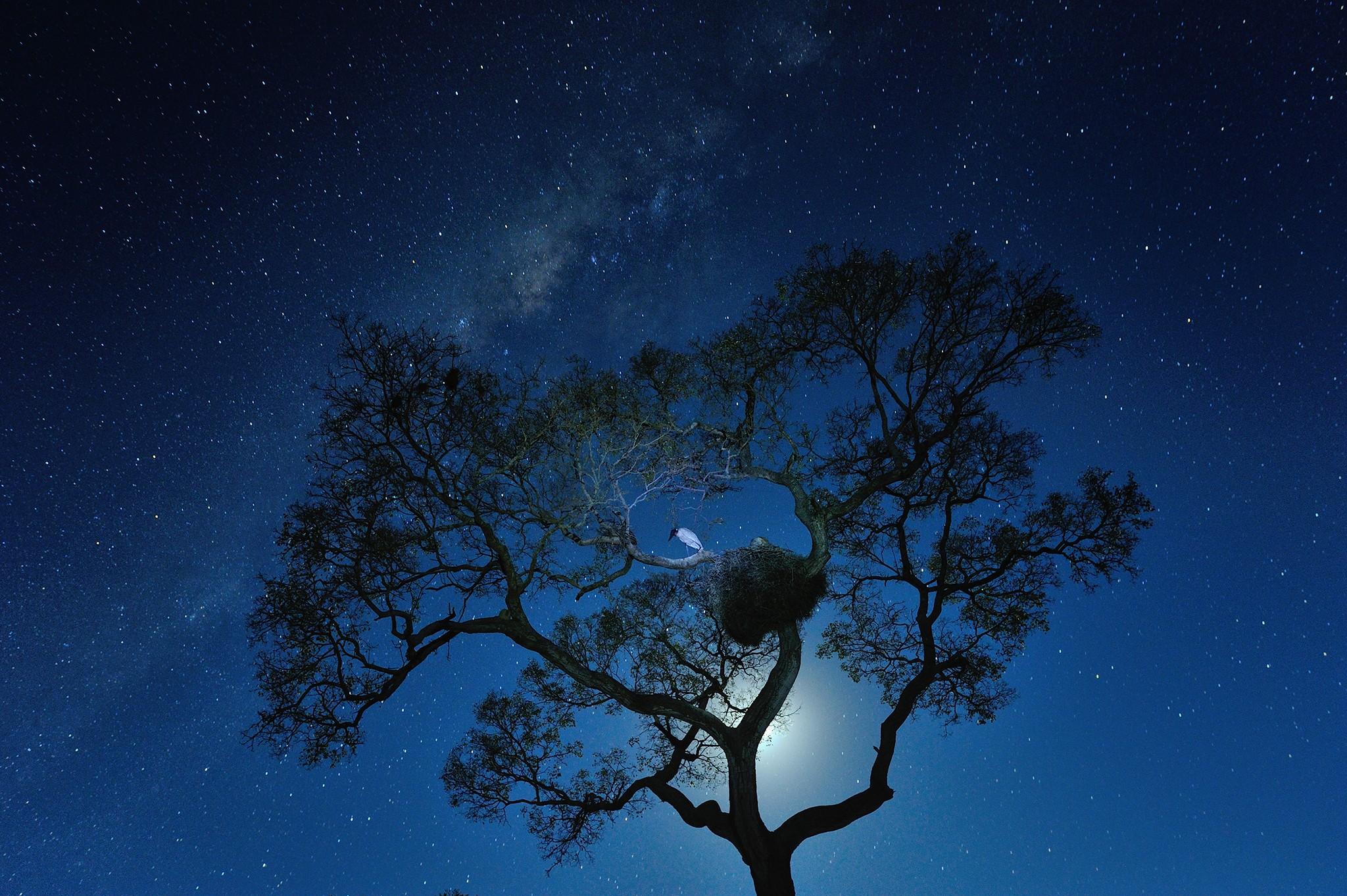 идея картинки ночное небо и деревья забываем