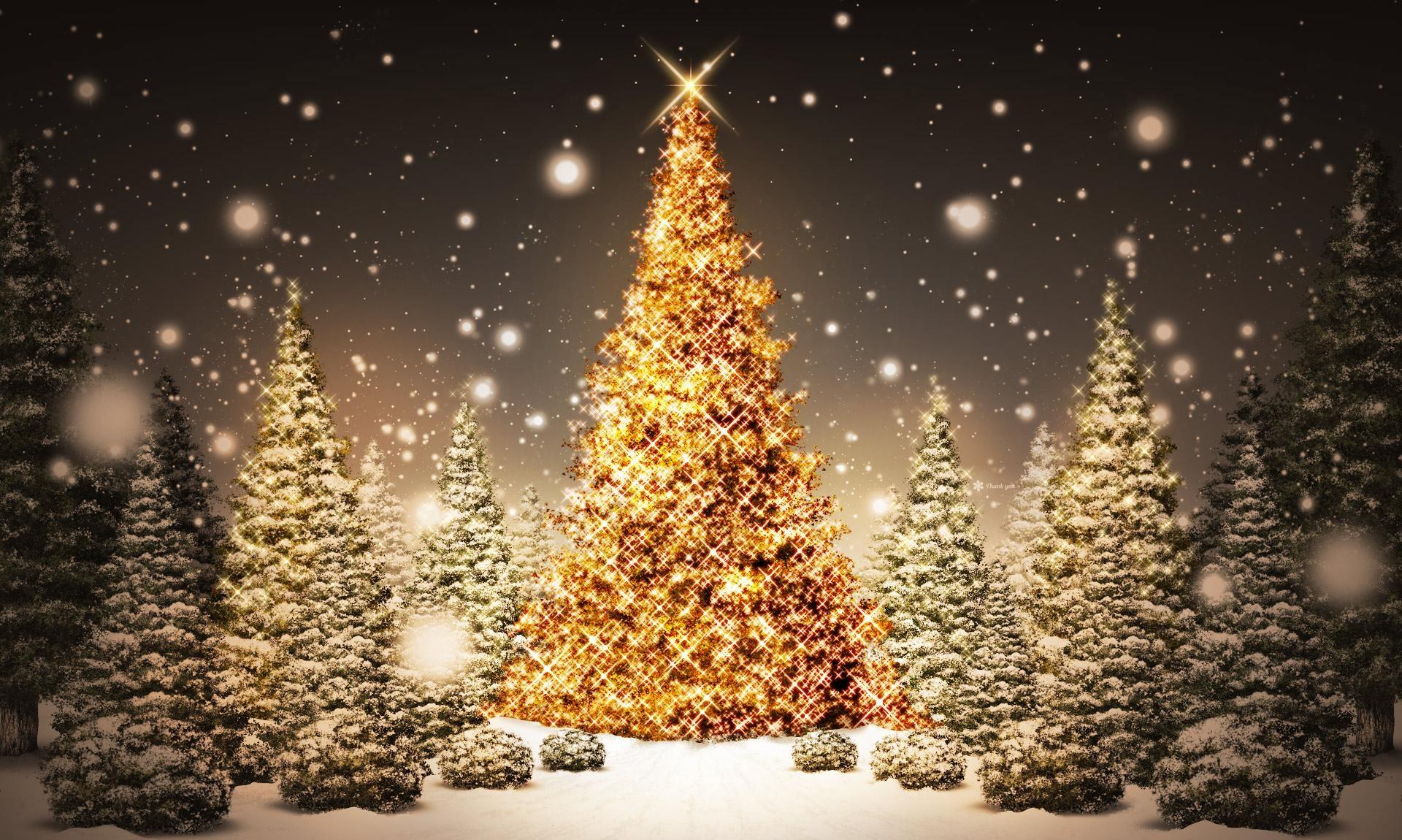 Wallpaper Trees Night Snow Wood Branch Christmas Tree
