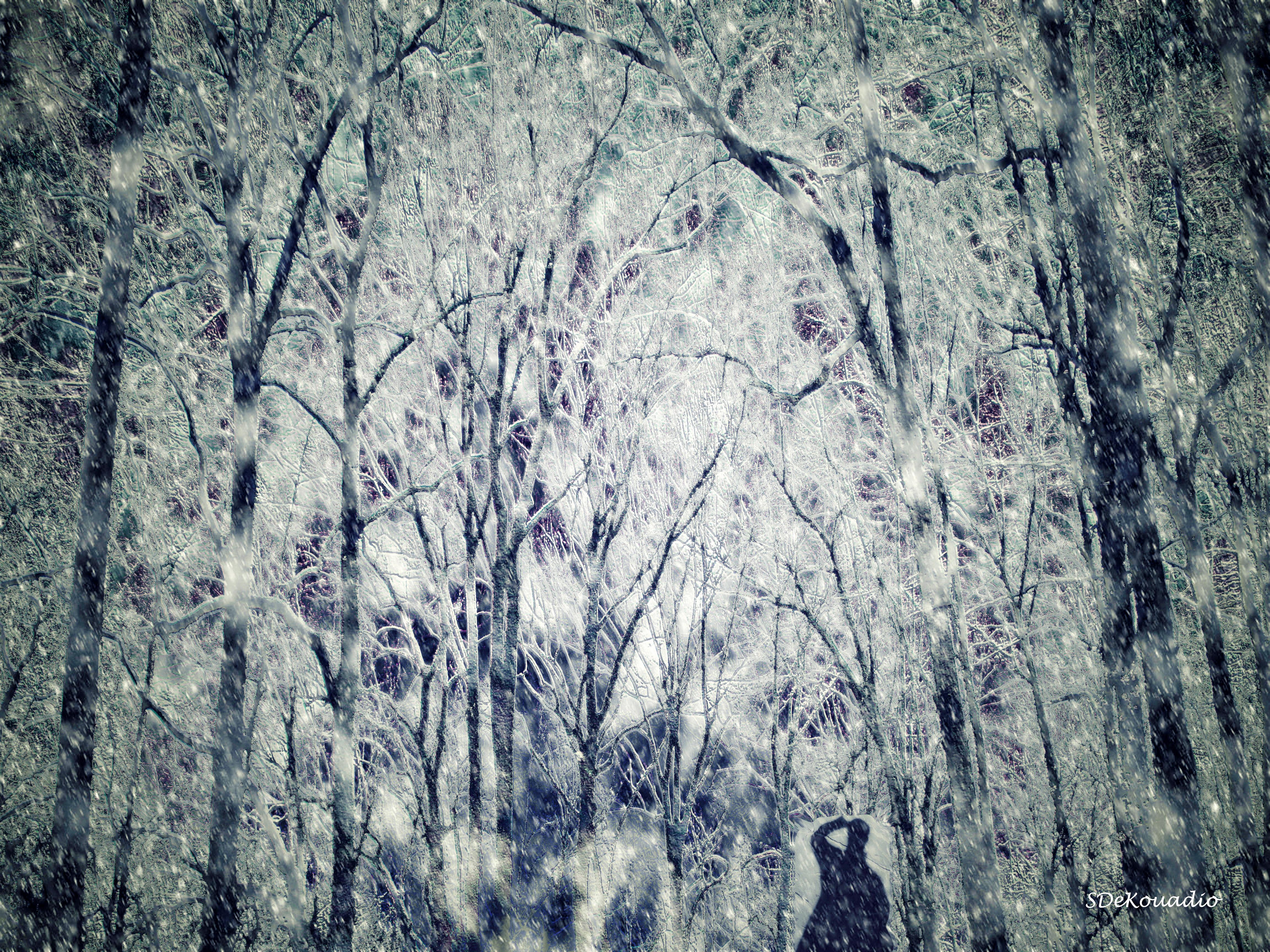 Masaustu Agaclar Boyama Orman Beyaz Soyut Doga Golge Kar