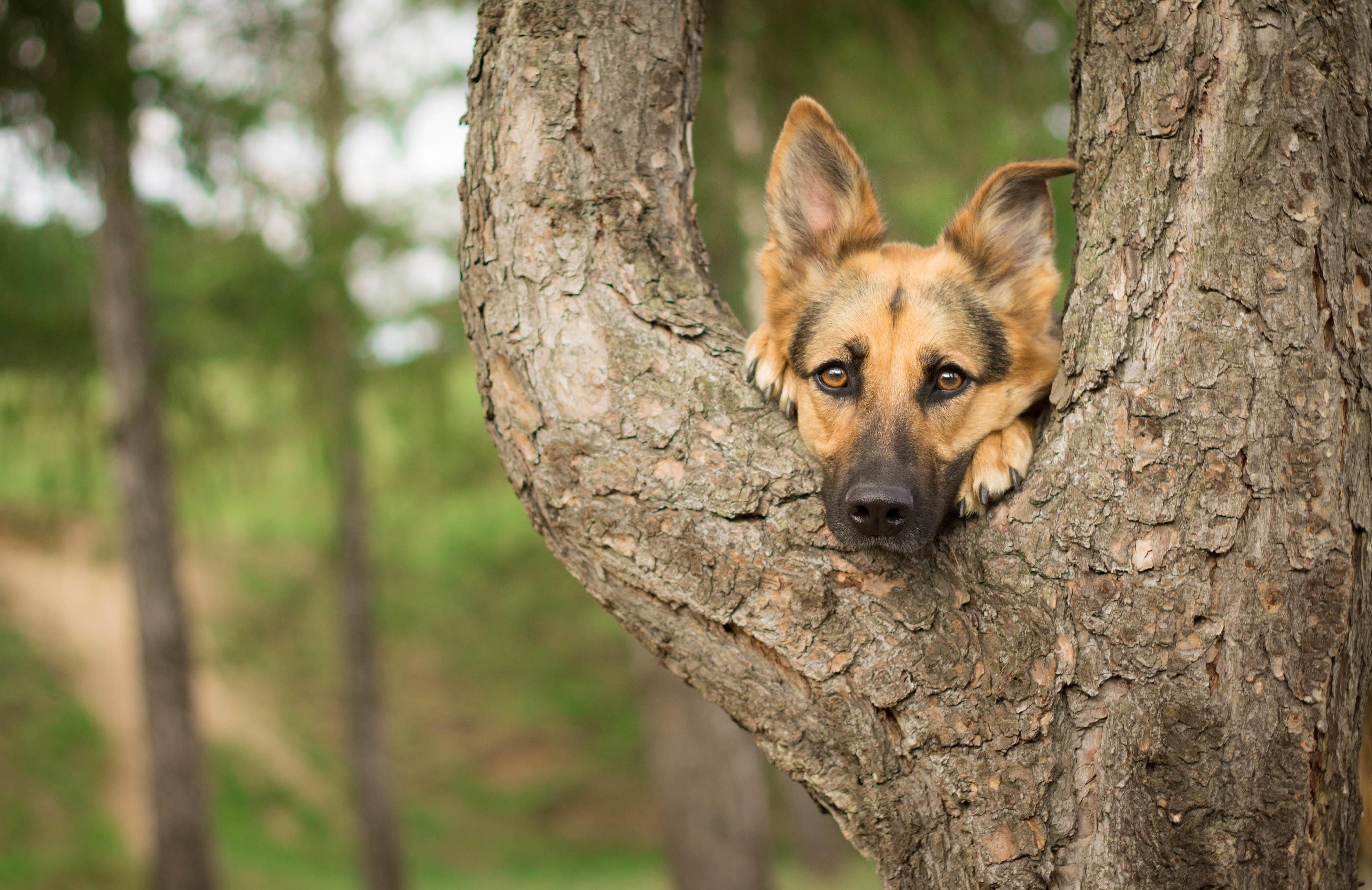 деревья картинки с собаками историю