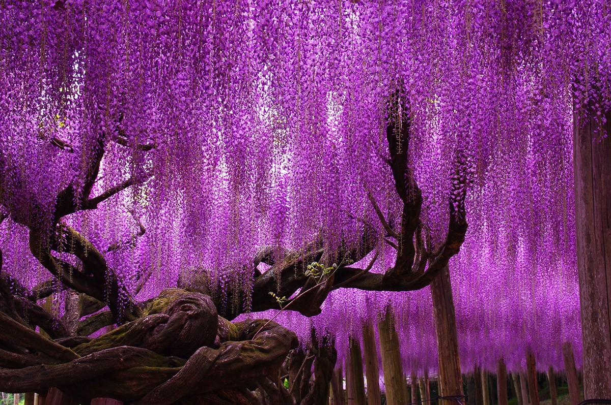 цветы деревьев картинки и названия этой