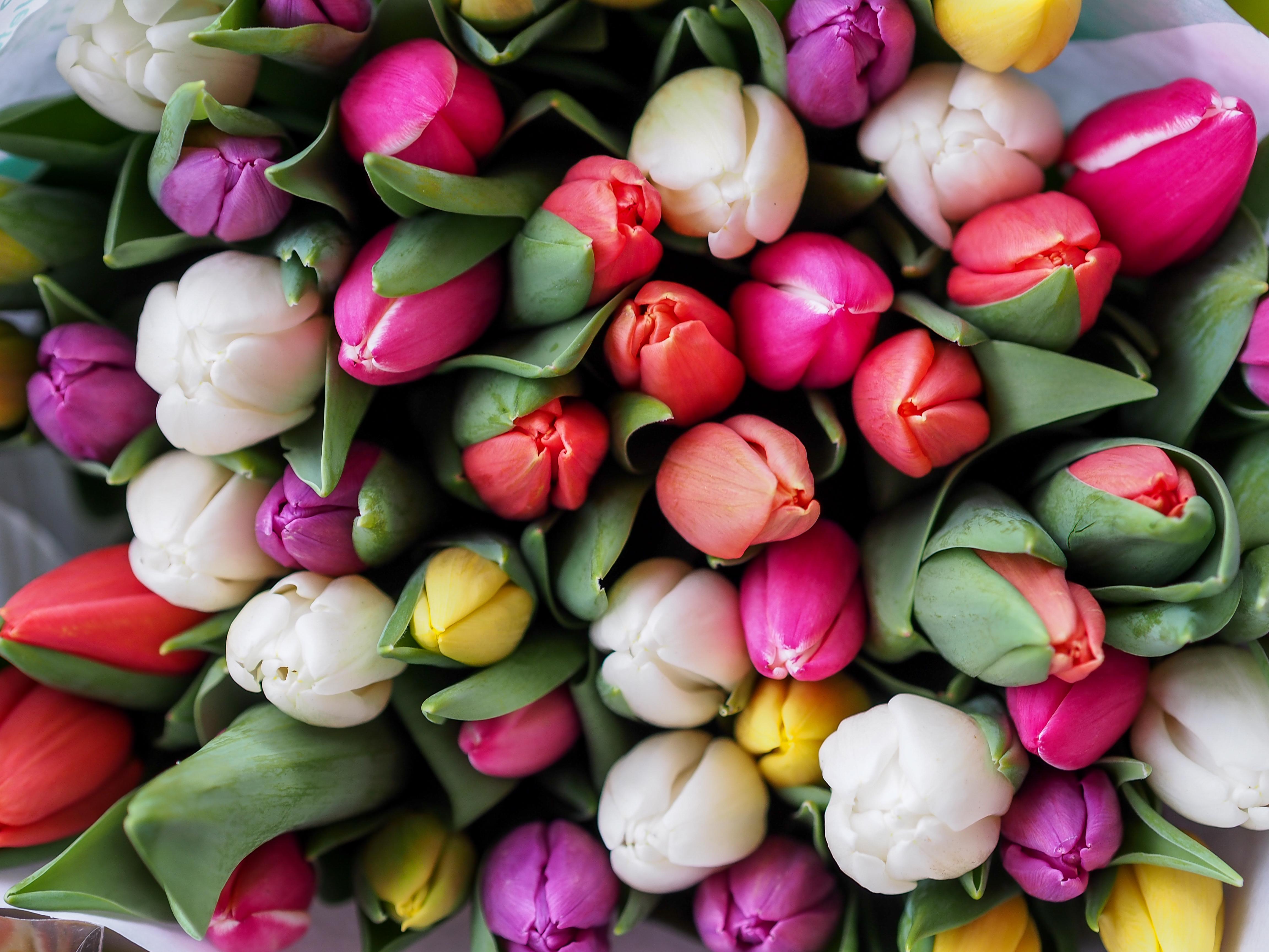 много тюльпанов в букете картинки новая папка