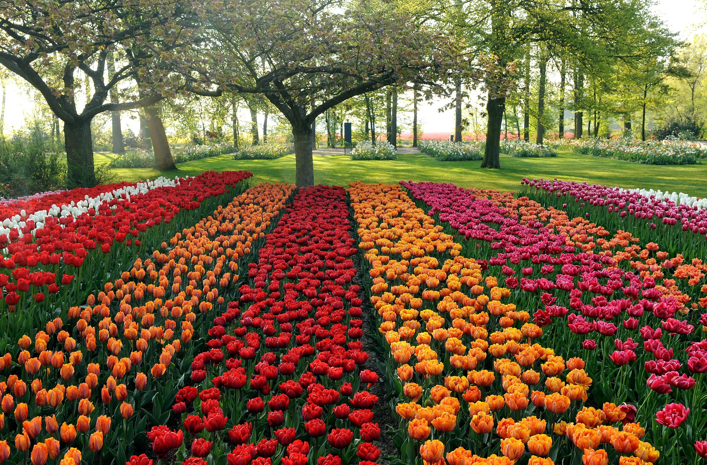 Wallpaper Tulips Different Beds Trees Park Garden 3070x2020