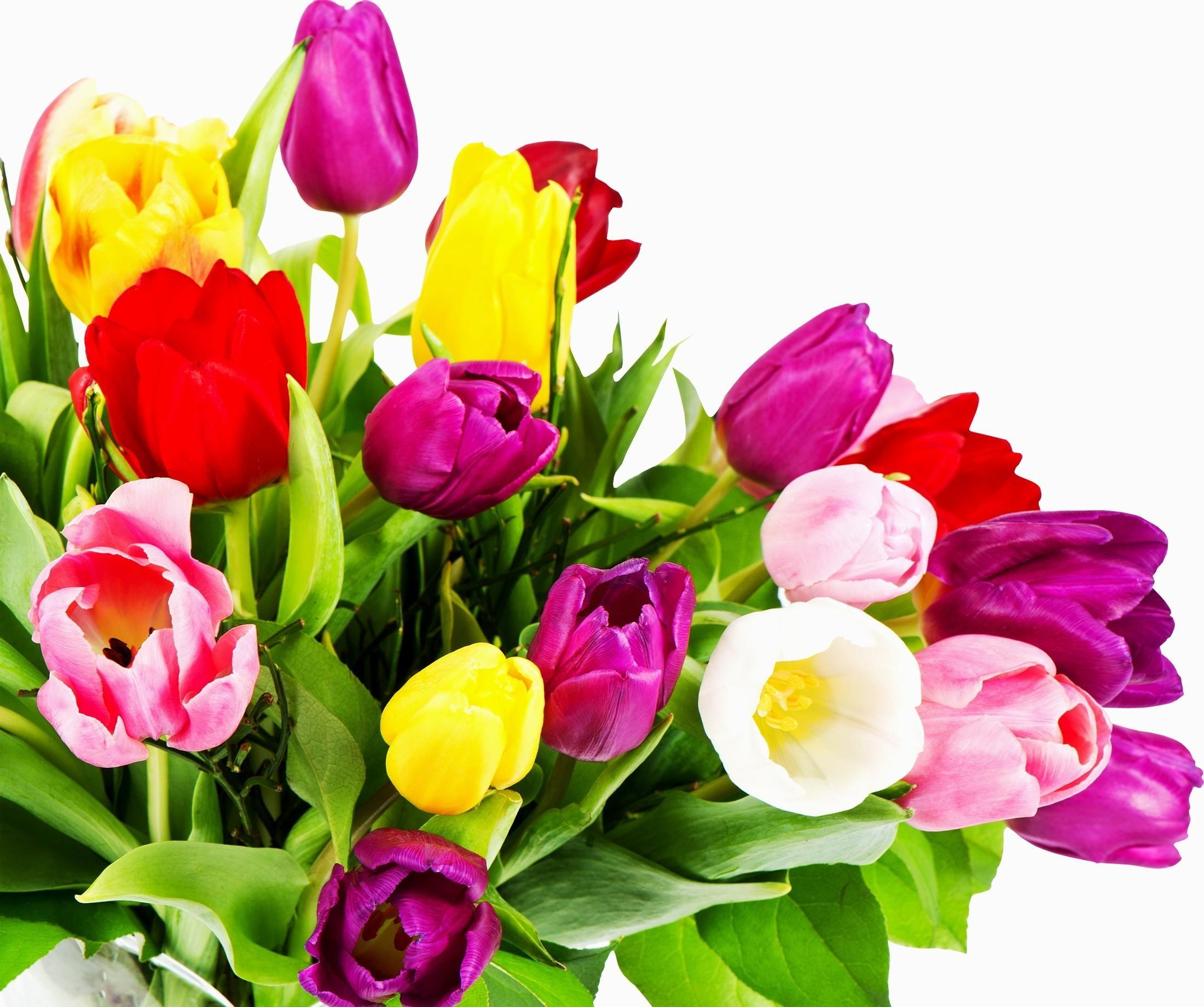 Wallpaper tulips flowers bouquet bright colorful white tulips flowers bouquet bright colorful white background izmirmasajfo