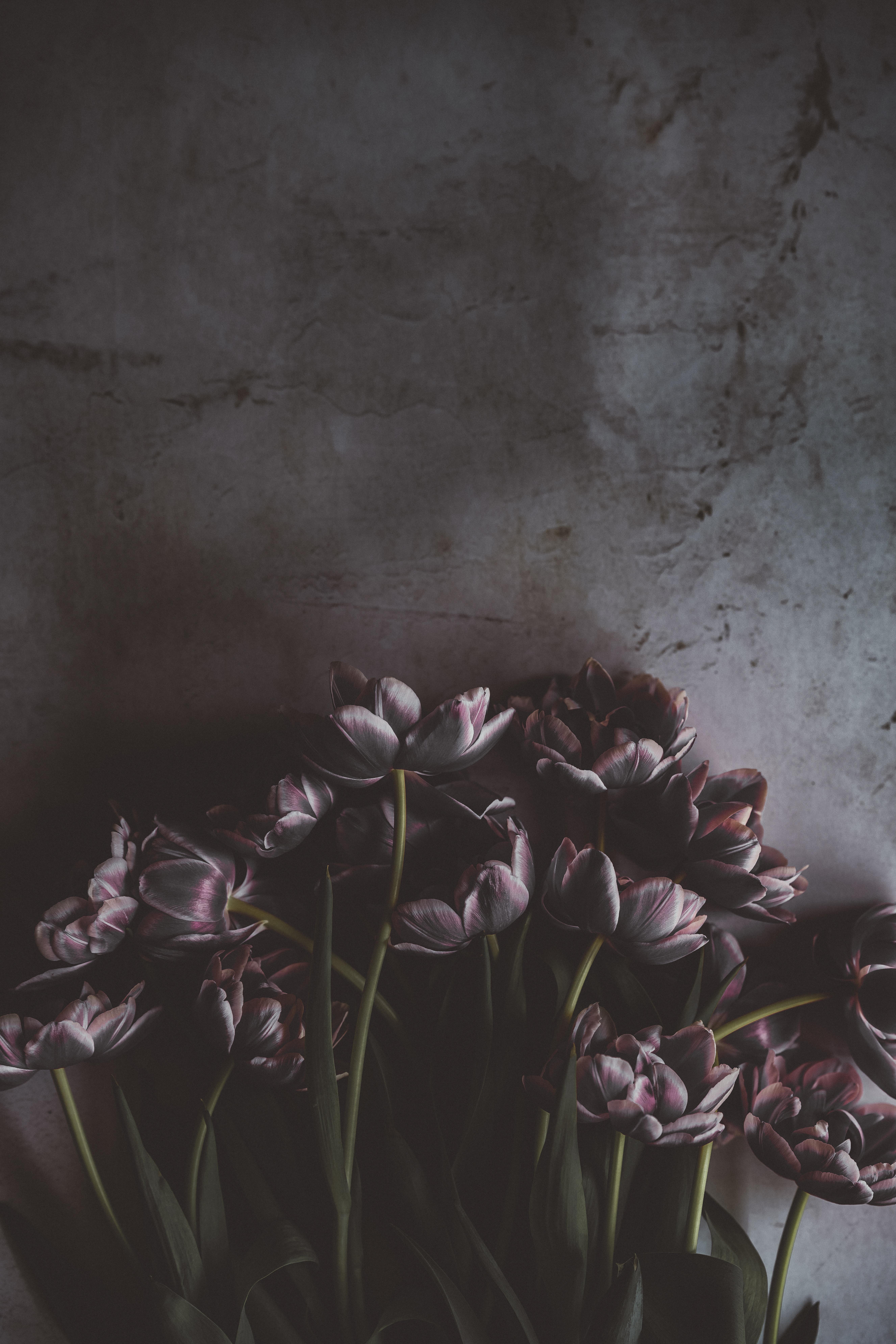 Wallpaper Tulips Flowers Bouquet Wall 5304x7952 Goodfon 1265257 Hd Wallpapers Wallhere
