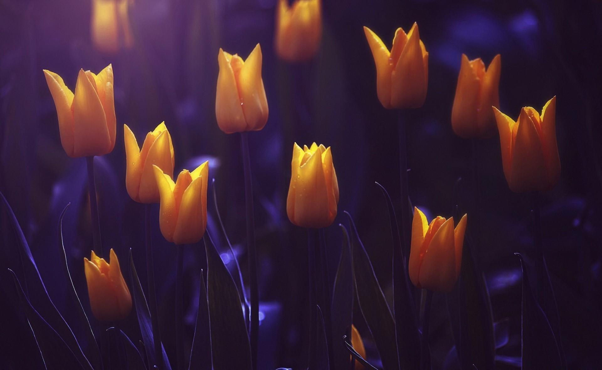 красивые картинки весенние цветы в ночи модель