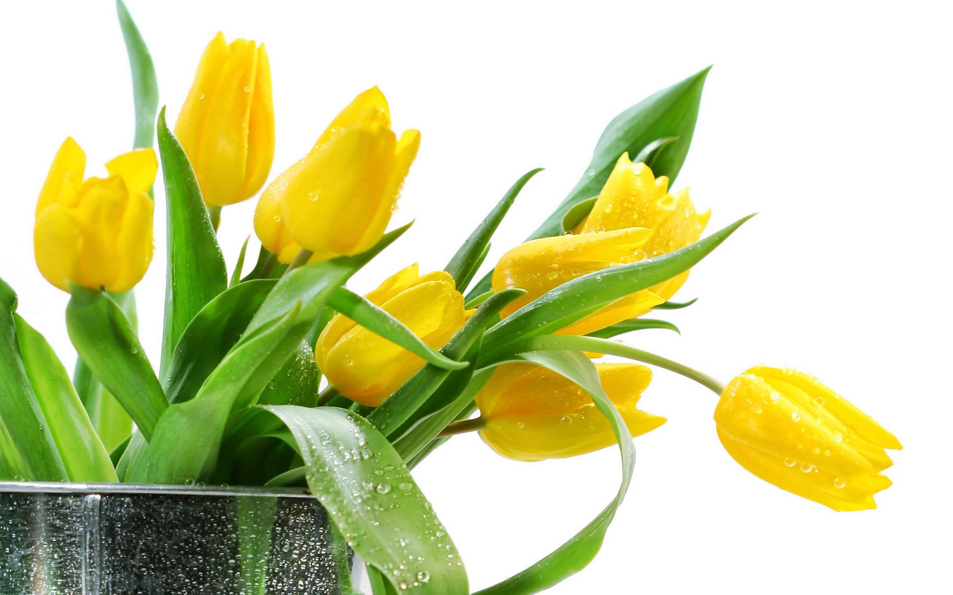 Wallpaper tulips yellow flowers bouquet 1920x1200 wallhaven tulips yellow flowers bouquet izmirmasajfo