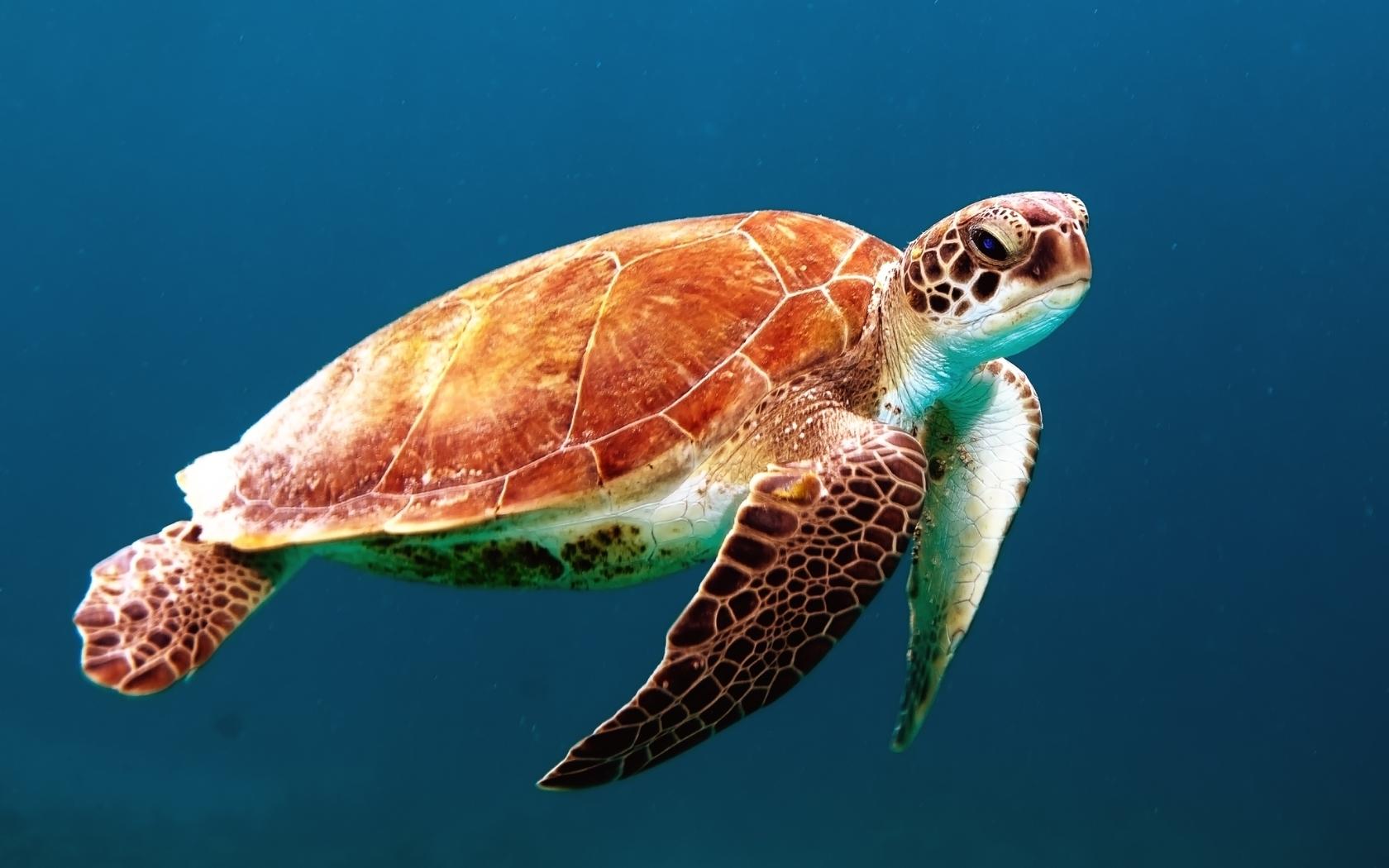Картинки с черепахами