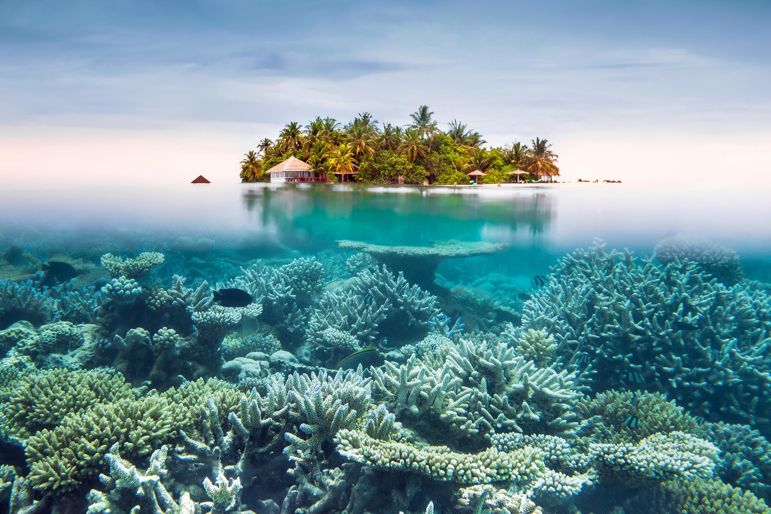 Wallpaper Underwater Island Sea Nature 2500x1667