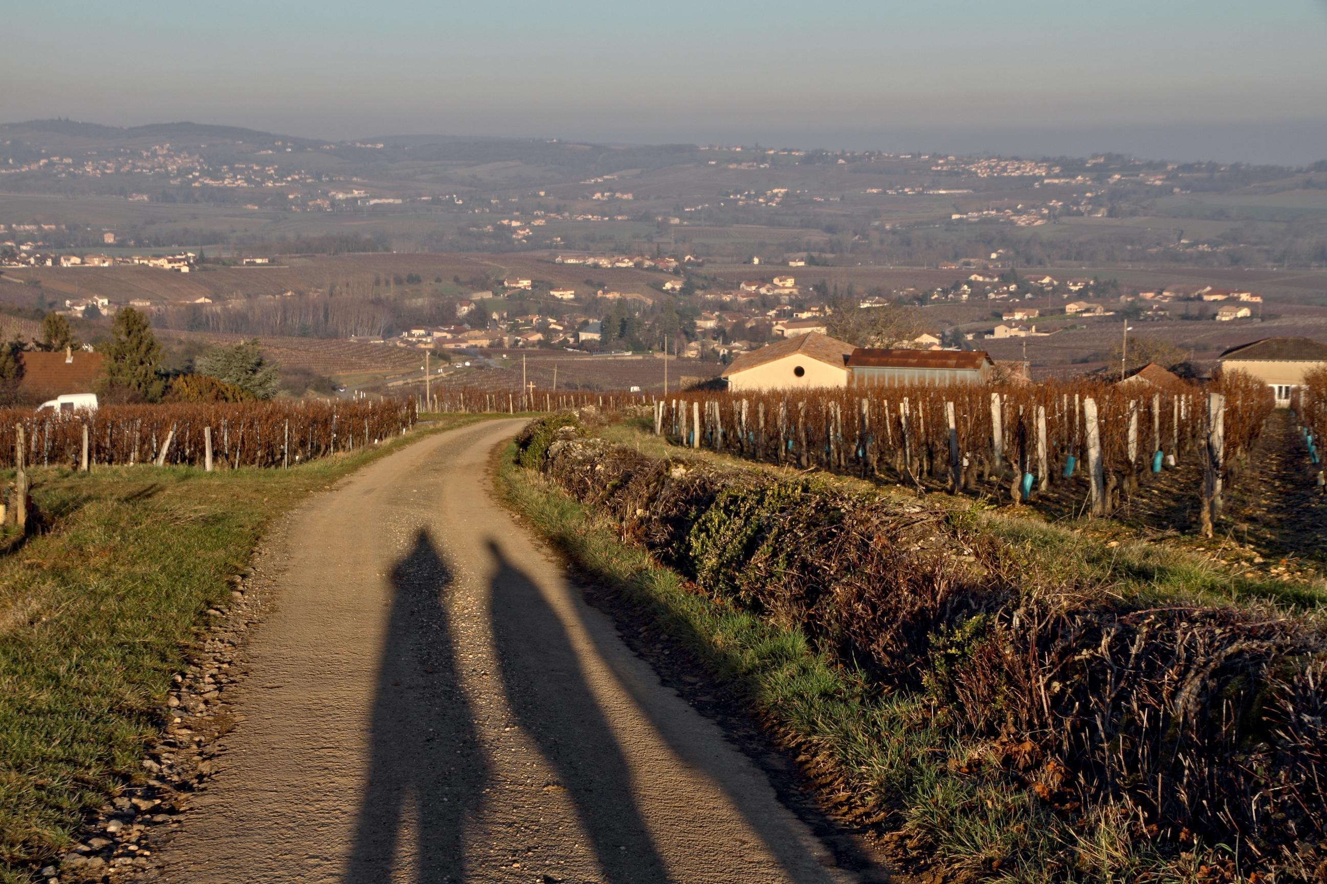 Wallpaper Vigne Vineyard Vine Vignoble Vallamartinien