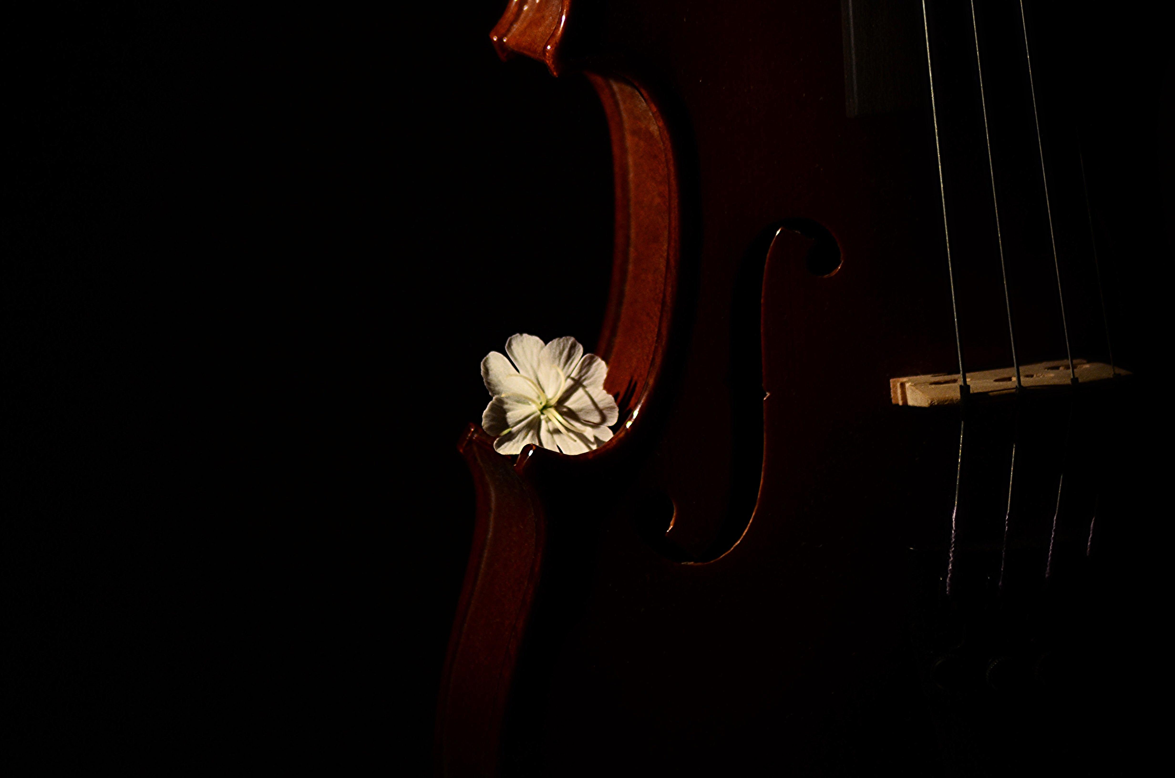 Wallpaper : violin, flowers, lightsandshadows