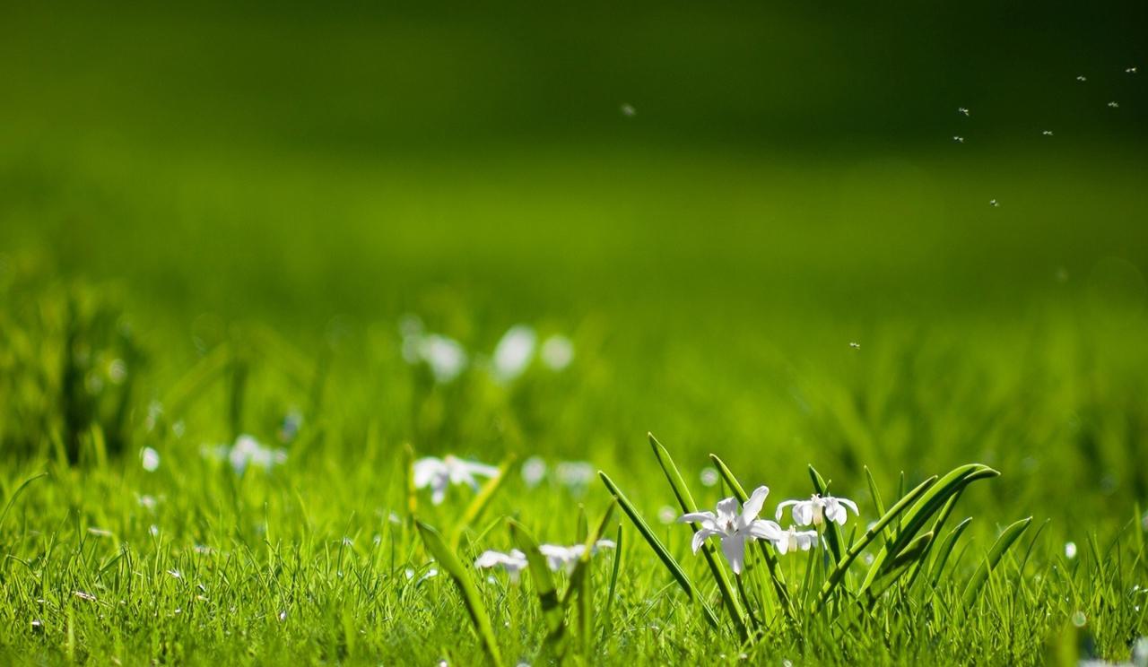 Papel de parede agua verde primavera flor vis o for Immagini gratis per desktop primavera