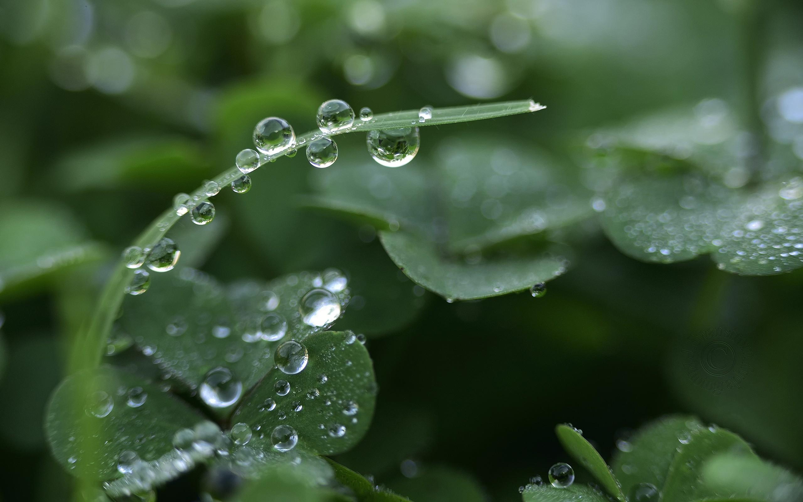 карина картинки с каплями на растении мой