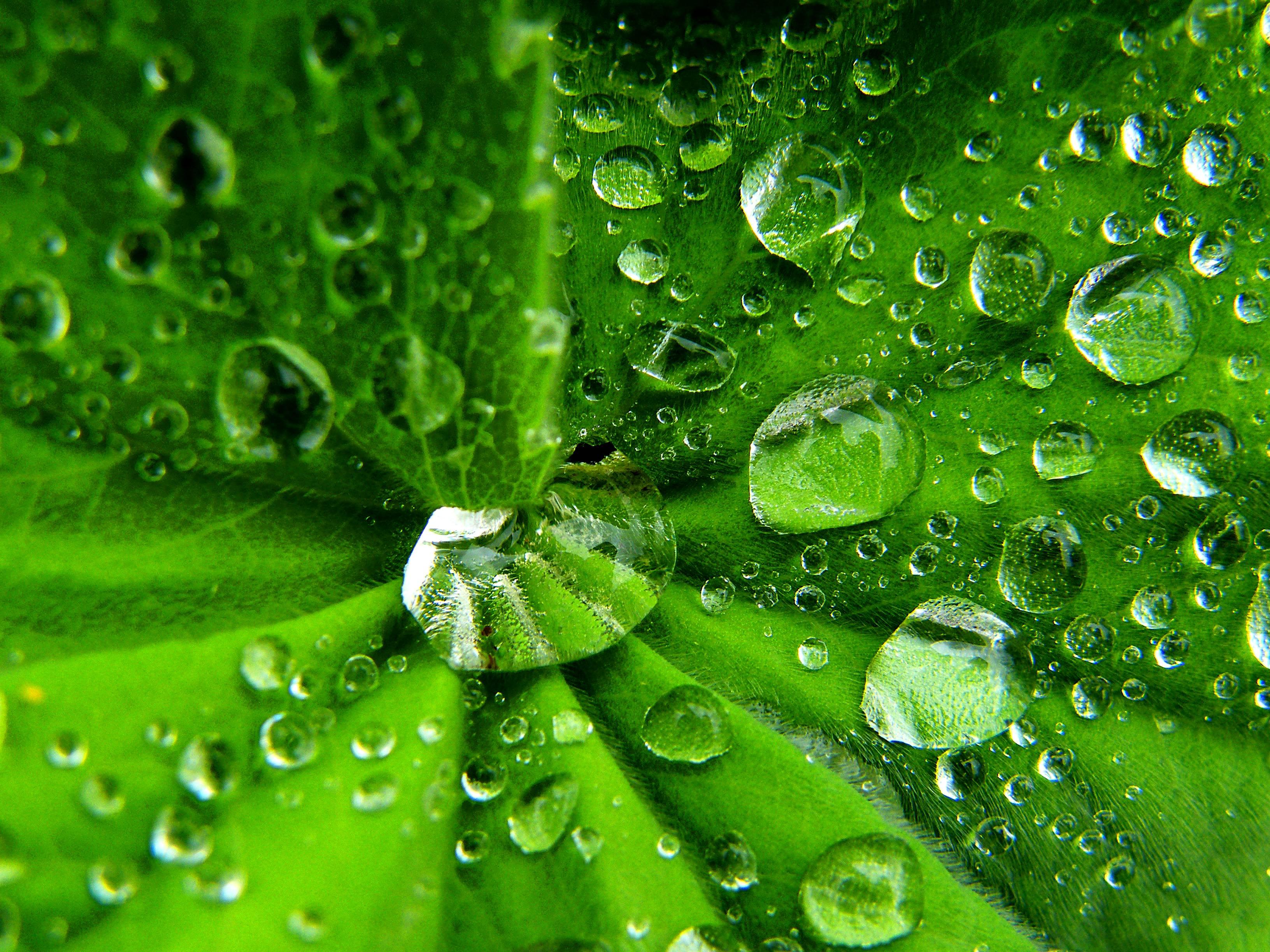 Wallpaper Rumput Hujan Hijau Basah Embun Daun