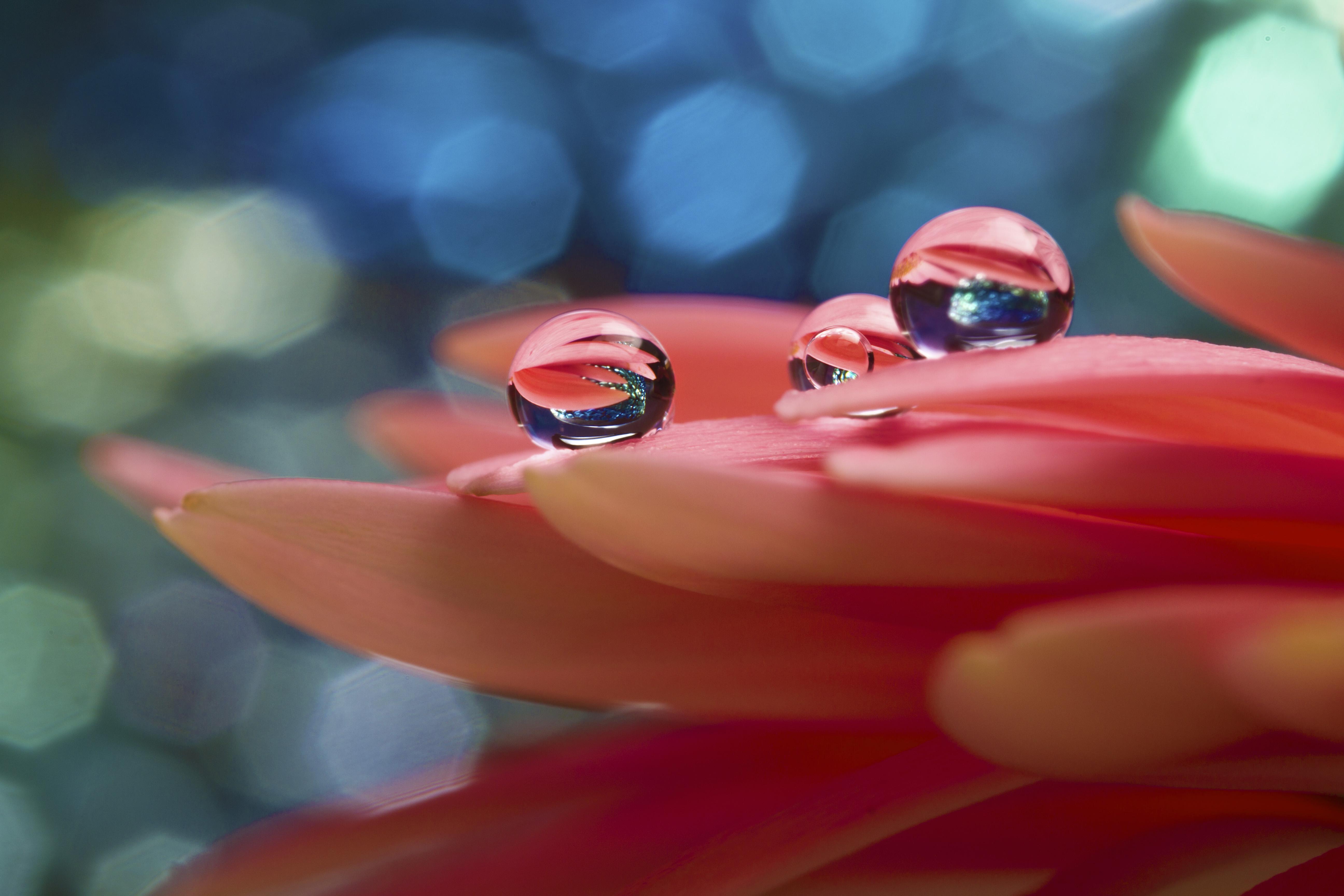 Wallpaper : water, nature, red, reflection, green, blue, bokeh ...