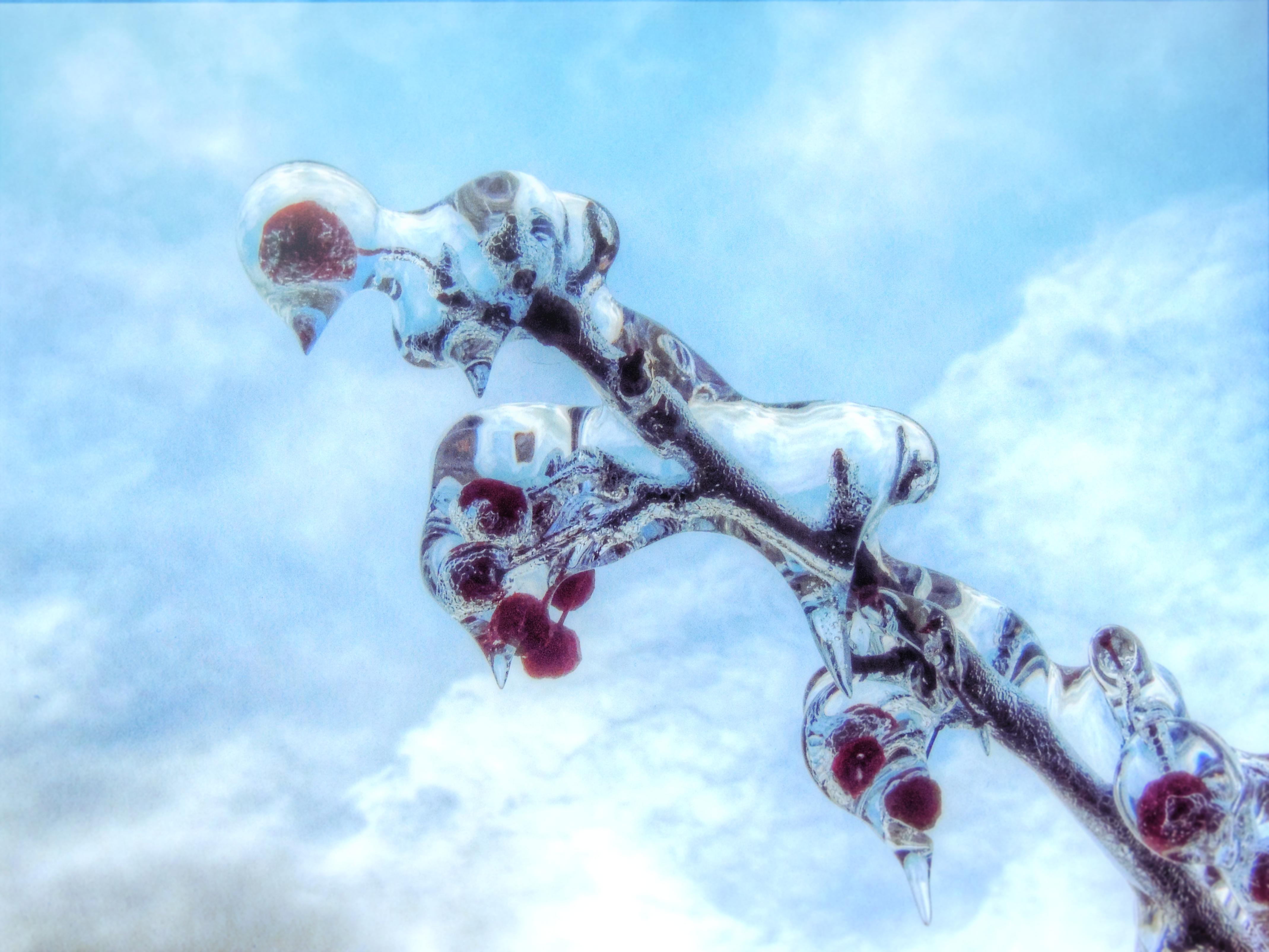 hintergrundbilder wasser rot himmel pflanzen schnee winter wolken ast blau eis frost. Black Bedroom Furniture Sets. Home Design Ideas