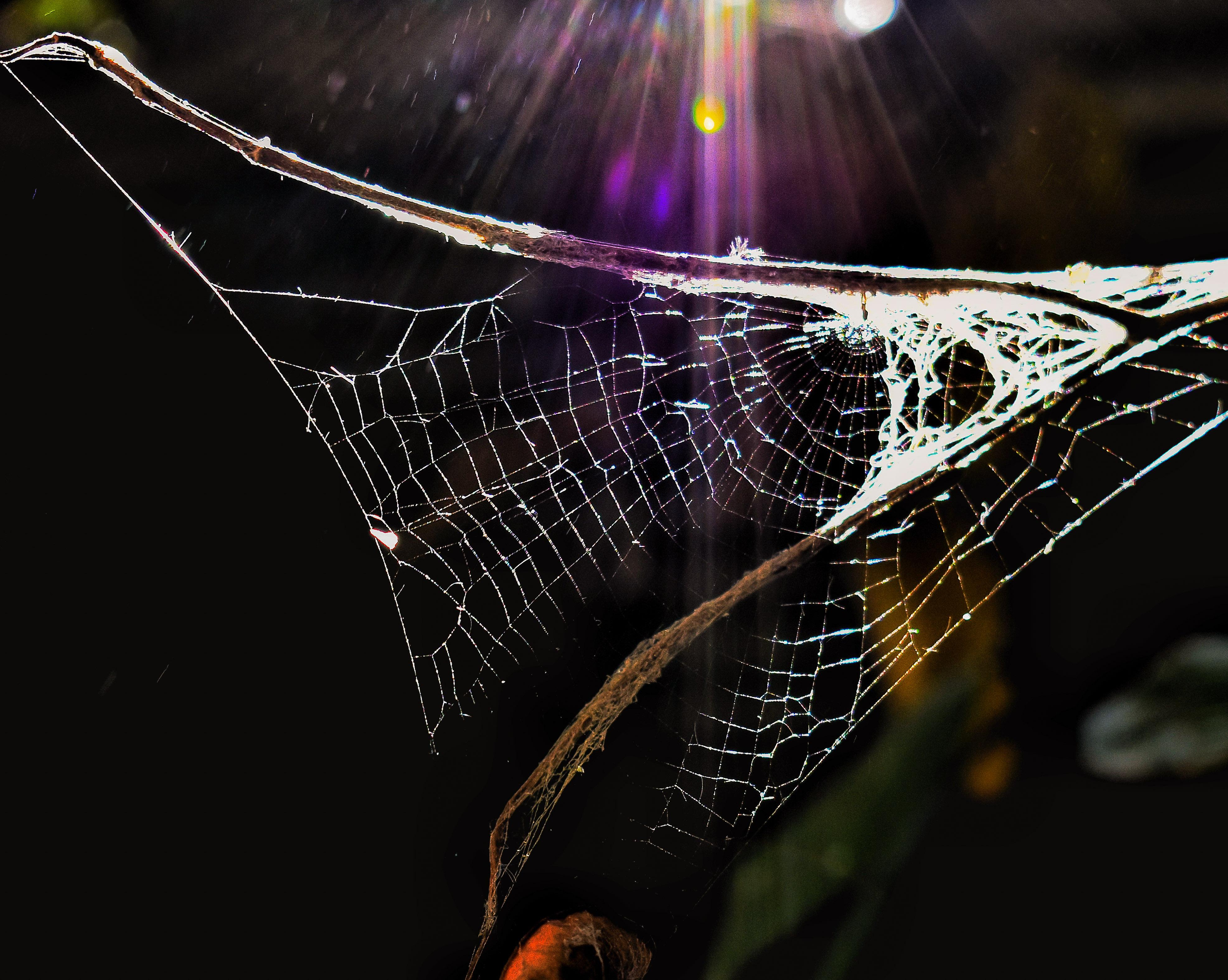 Web pripojiť