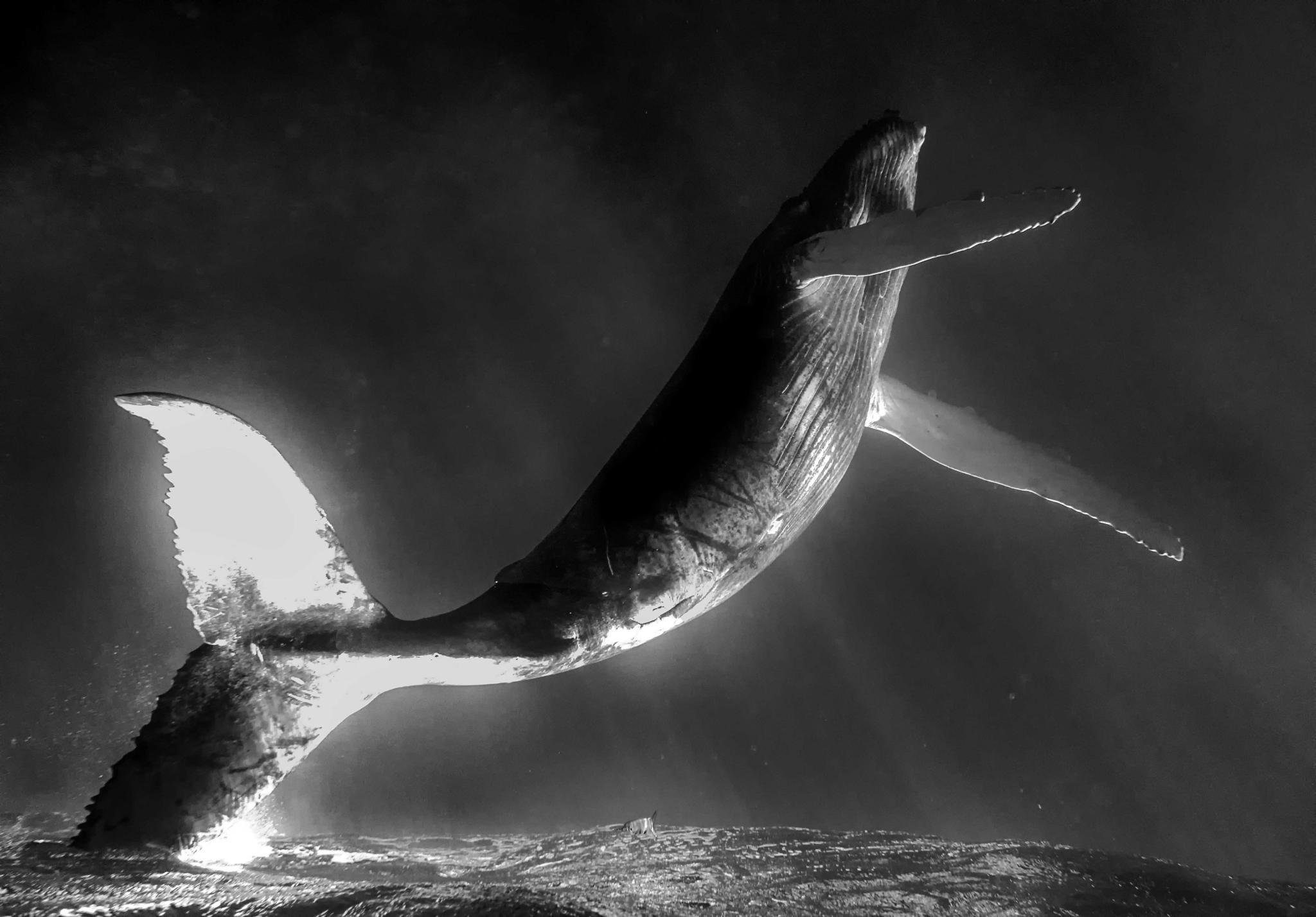 Рисунки и фото китов психология