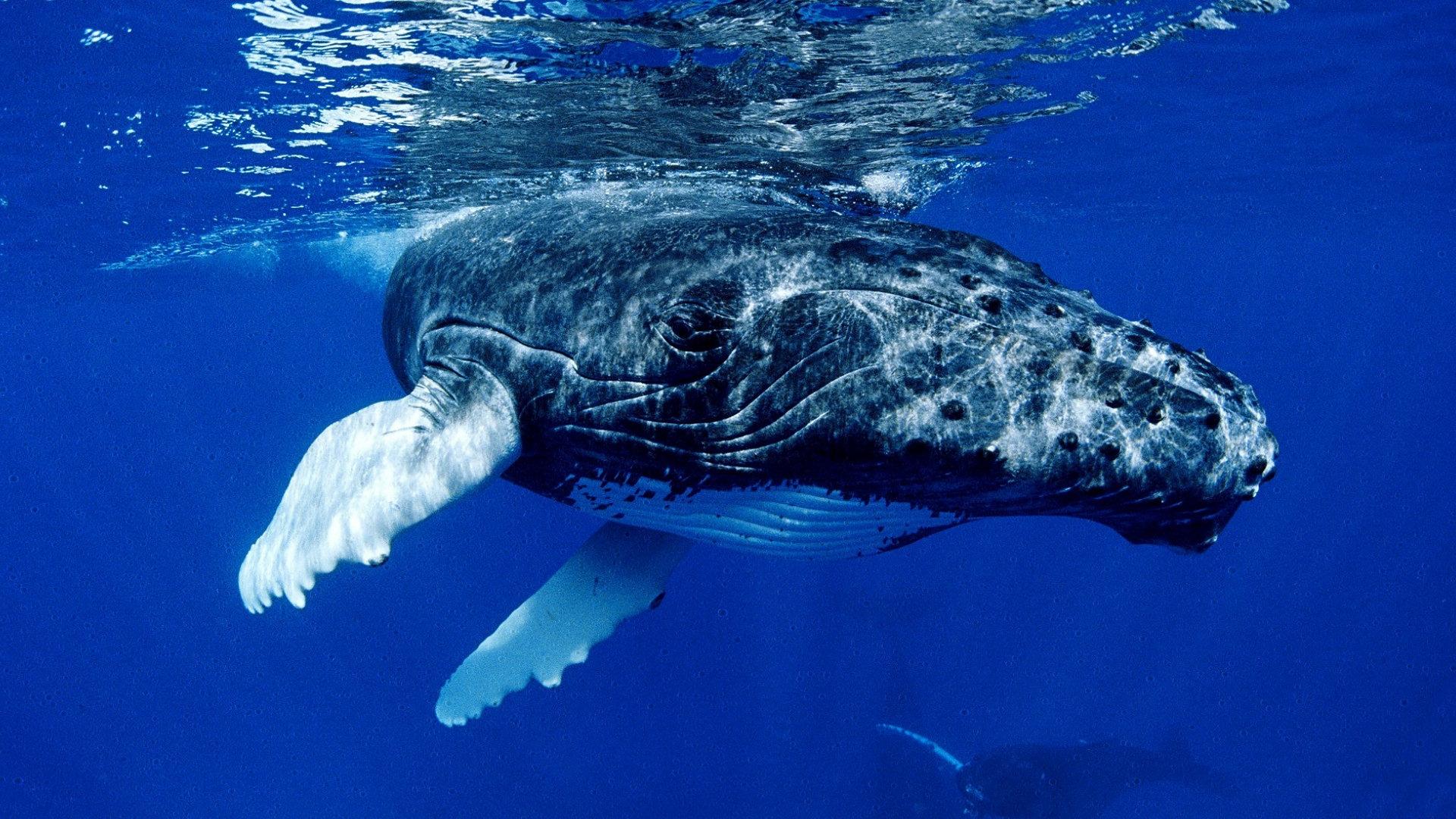 Картинки на стол киты